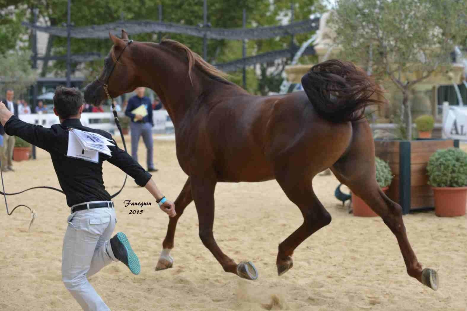 KARAM ALBIDAYER en 2015 - Concours national Nîmes prestige - notre sélection - 02
