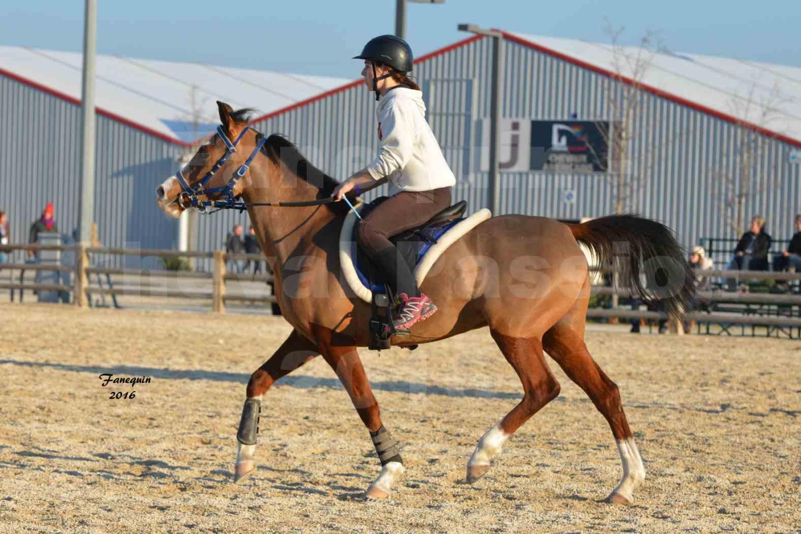 Cheval Passion 2016 - Présentation extérieure de chevaux Arabes montés - 11
