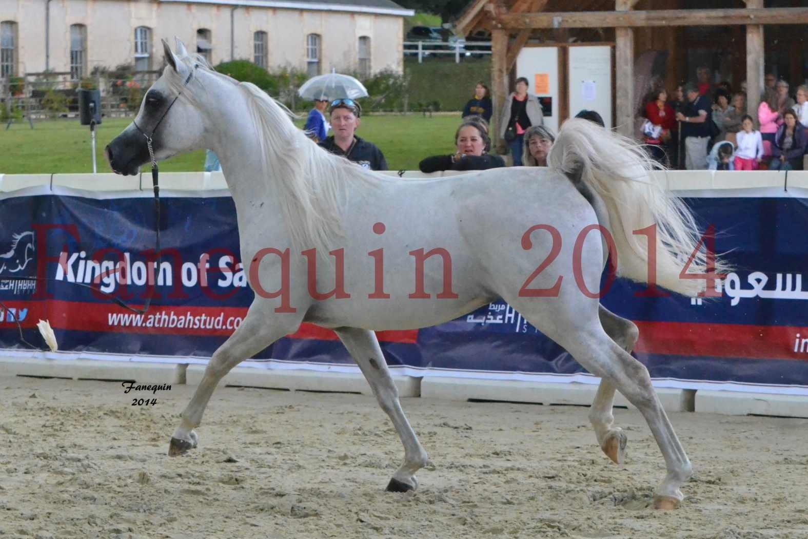 CHAMPIONNAT DE FRANCE 2014 A POMPADOUR - Notre Sélection - FA STARLIGHT - 5