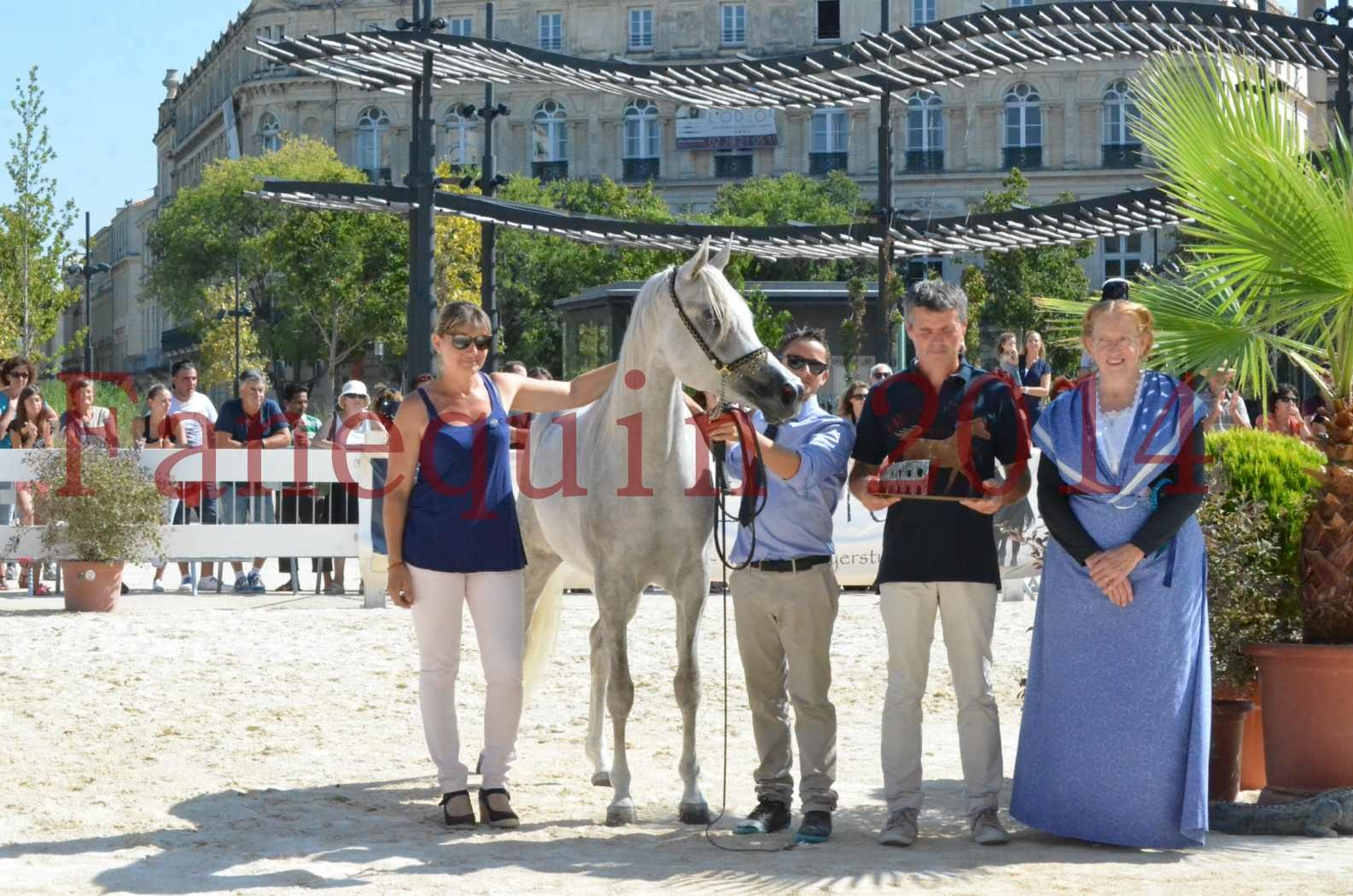 Concours national de Nîmes 2014 - Championnat Femelles Juniors - VOLODIA DE LAFON - 25