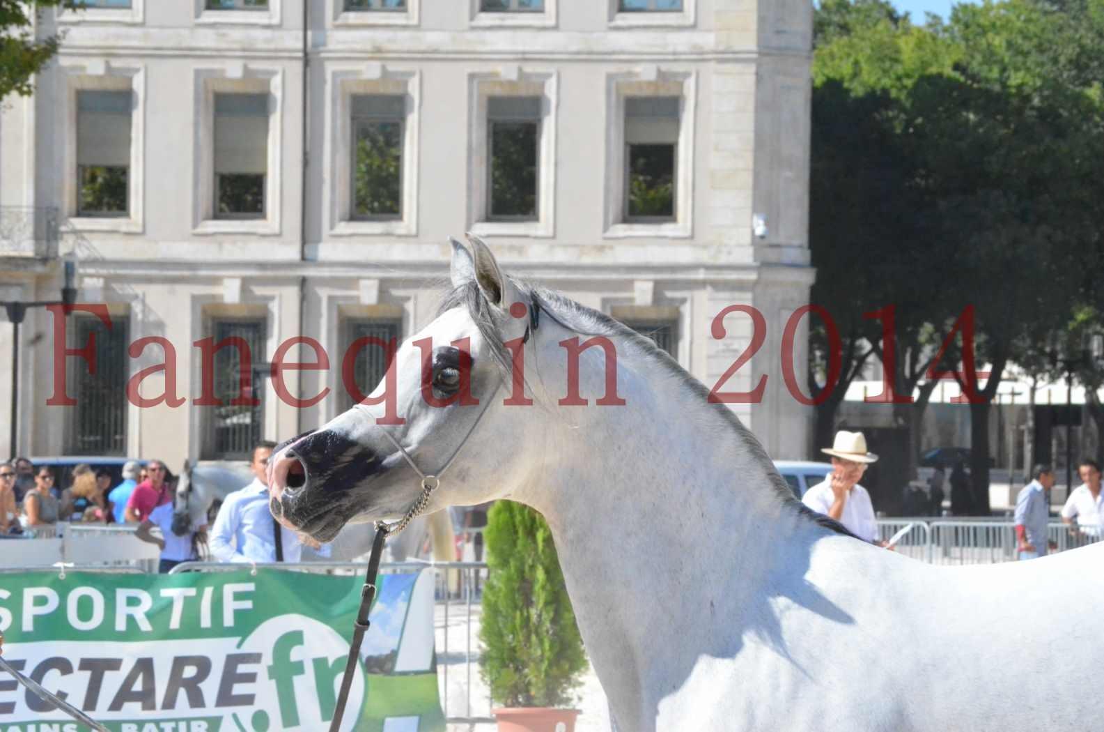 Concours National de Nîmes de chevaux ARABES 2014 - Sélection - SHAOLIN DE NEDJAIA - 58