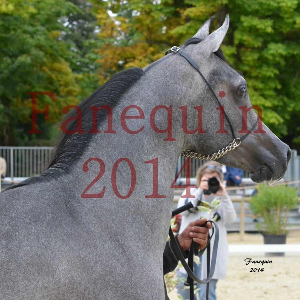 CHAMPIONNAT DE FRANCE 2014 A POMPADOUR - Notre Sélection - Portraits - AL MINYA - 5