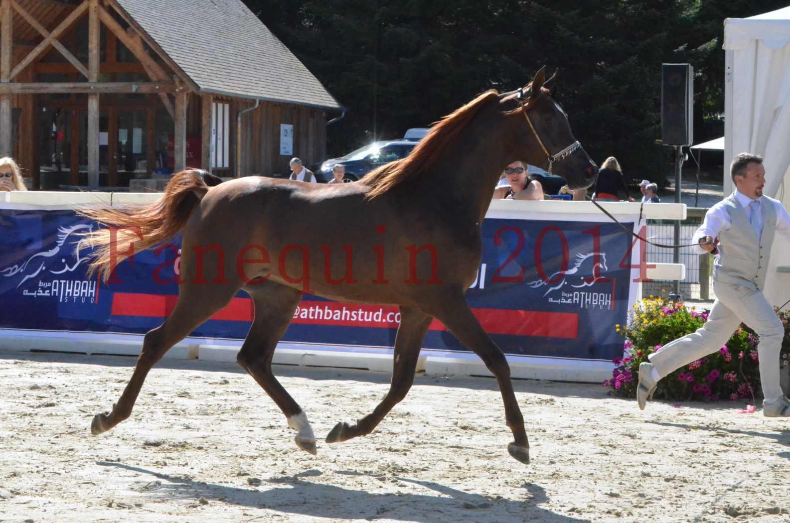 Championnat de FRANCE 2014 - Amateurs - LAMAL - 11