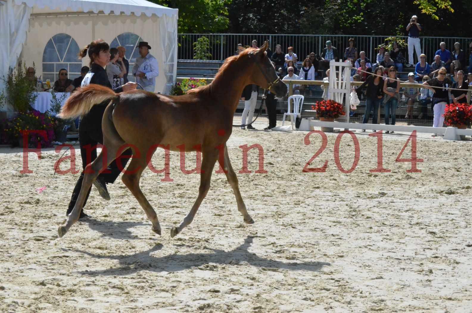 CHAMPIONNAT DE FRANCE 2014 A POMPADOUR - Championnat - TSAR KENZA - 50