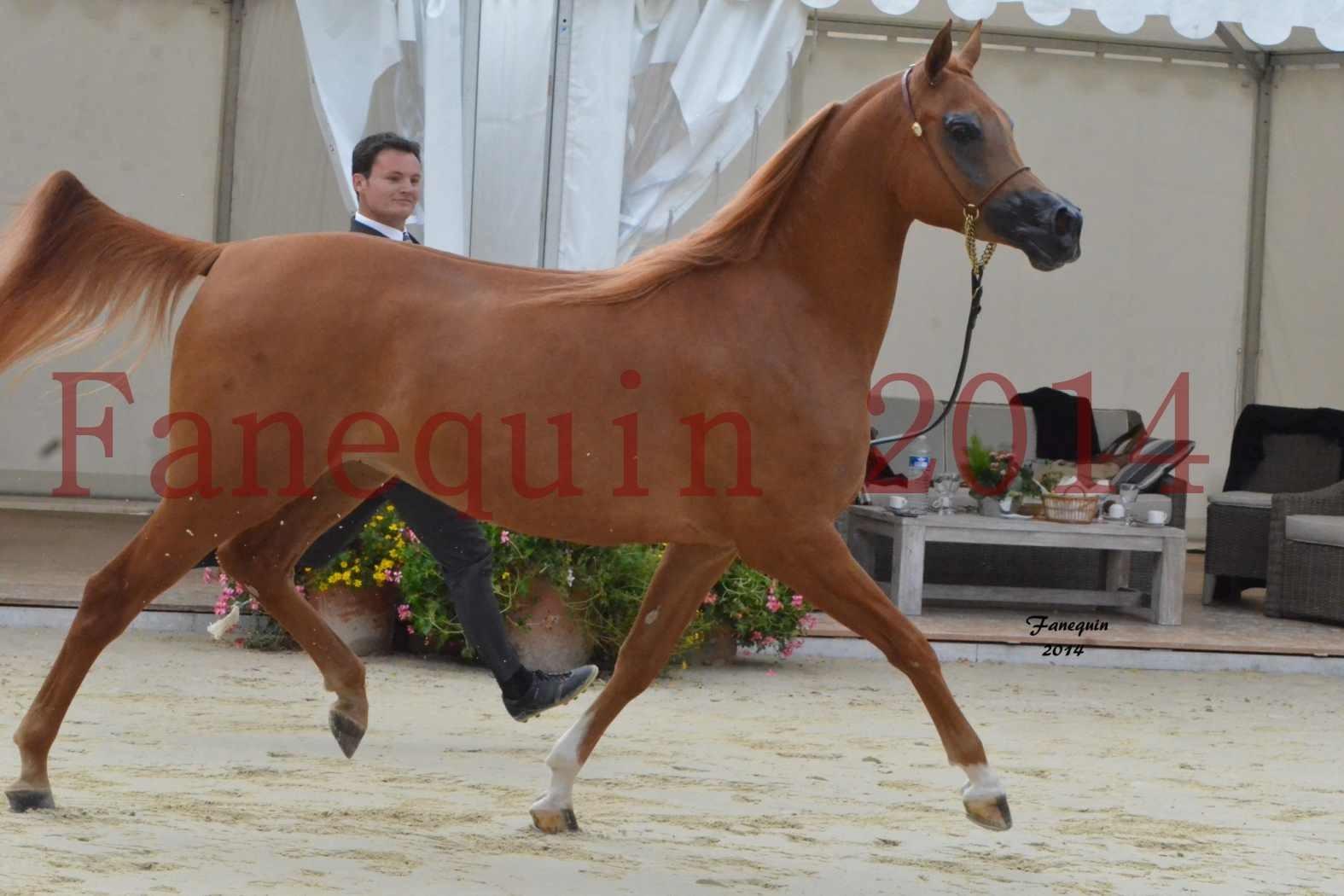 CHAMPIONNAT DE FRANCE 2014 A POMPADOUR - Notre Sélection - LUTFINAH JA - 12