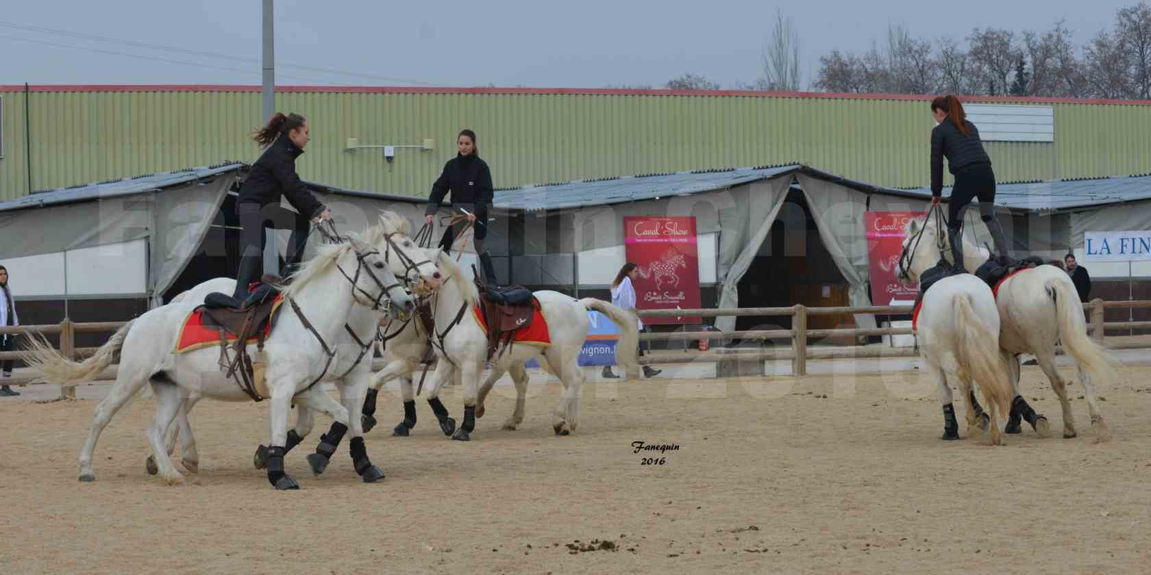 Cheval Passion 2016 - CAMARGUE poste hongroise - 4