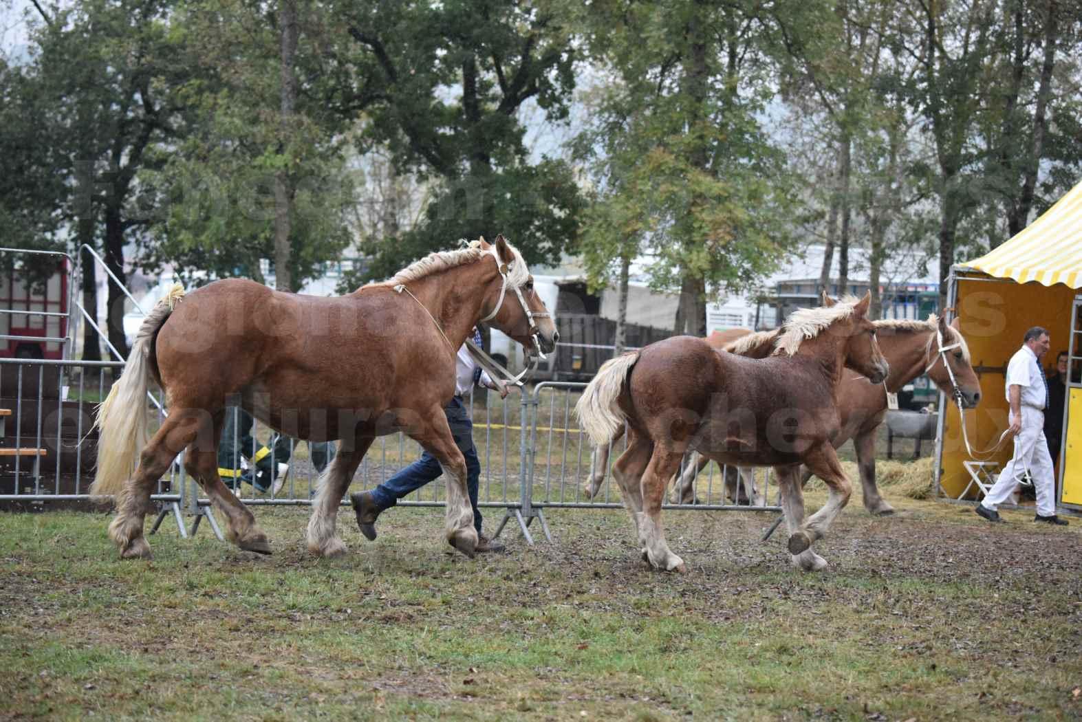 Concours Régional de chevaux de traits en 2017 - Trait COMTOIS - Jument suitée - ROXANE D'USSON - 07