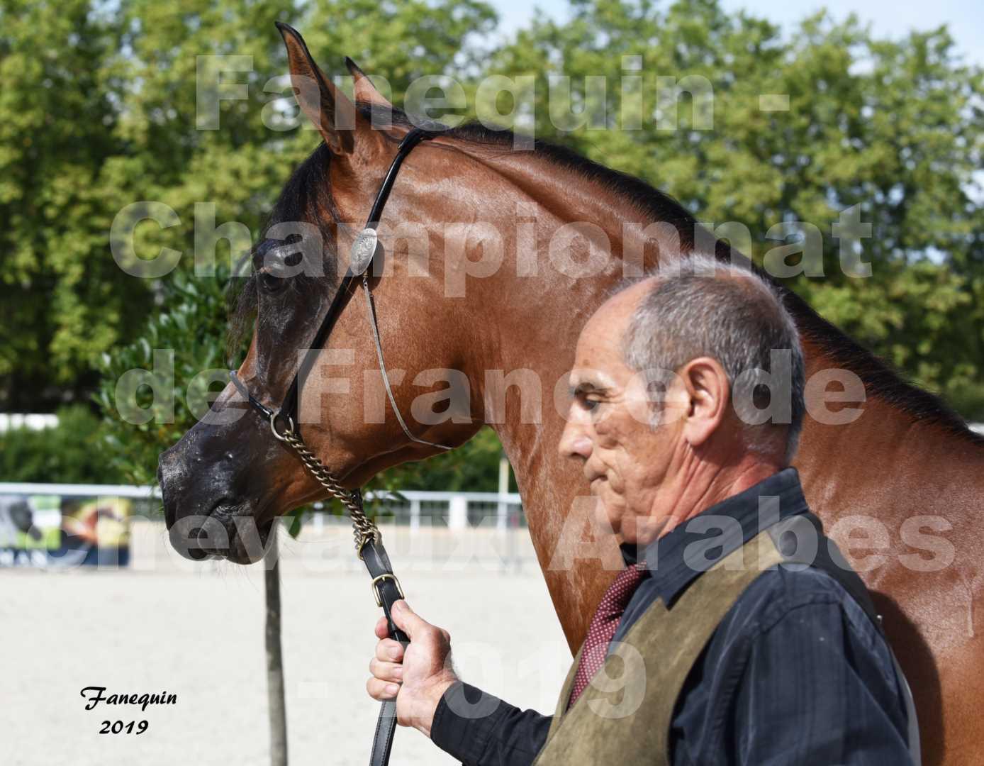 Championnat de France des chevaux Arabes en 2019 à VICHY - SH CHARISMA - Portraits - 1