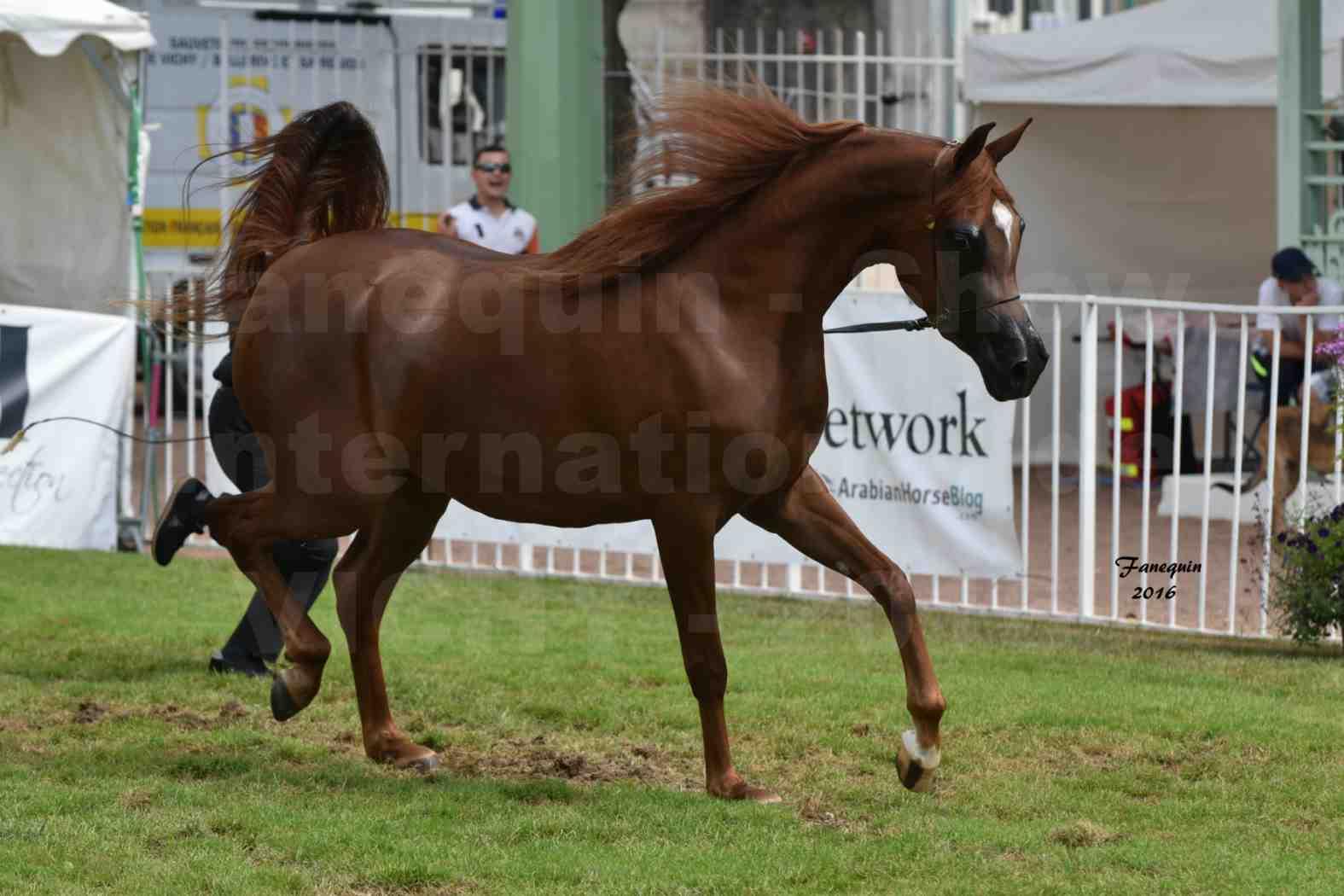 International Arabian Horse Show B de VICHY 2016 - PEARL DE DJOON - Notre Sélection - 27