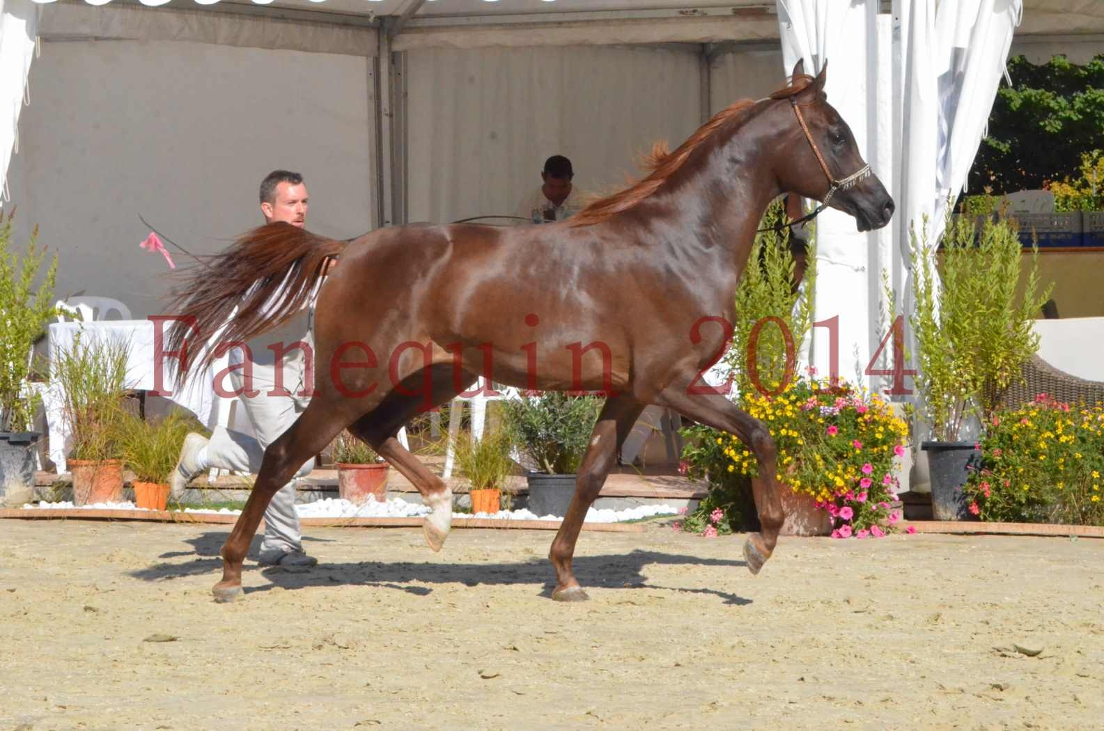 Championnat de FRANCE 2014 - Amateurs - LAMAL - 56