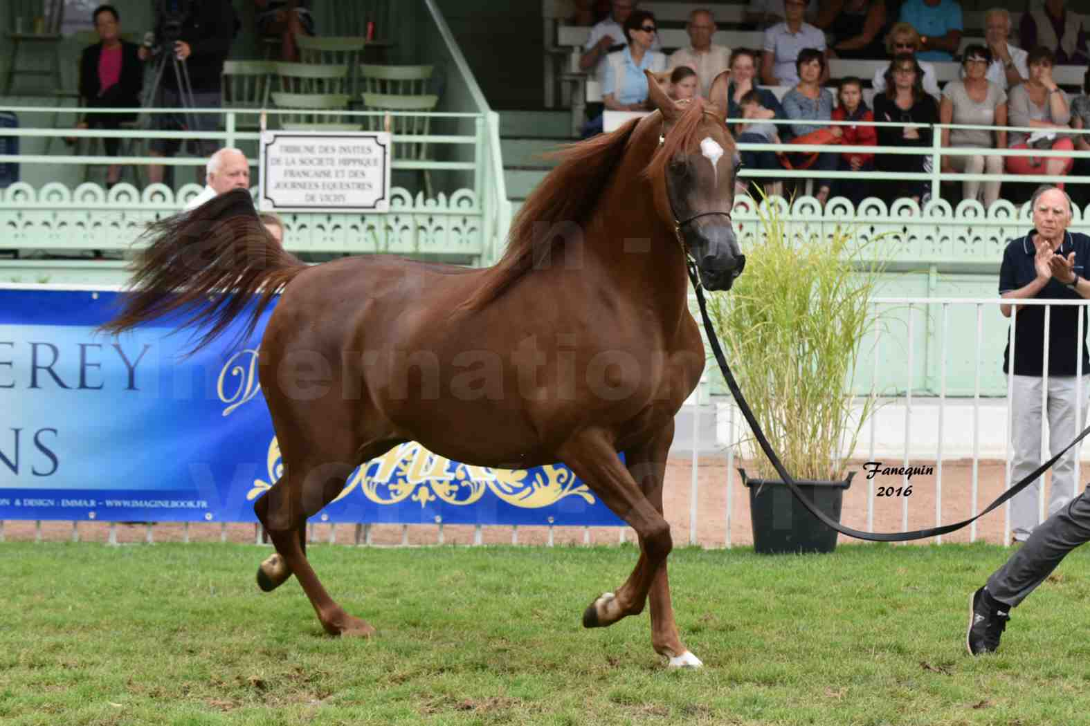 International Arabian Horse Show B de VICHY 2016 - PEARL DE DJOON - Notre Sélection - 11