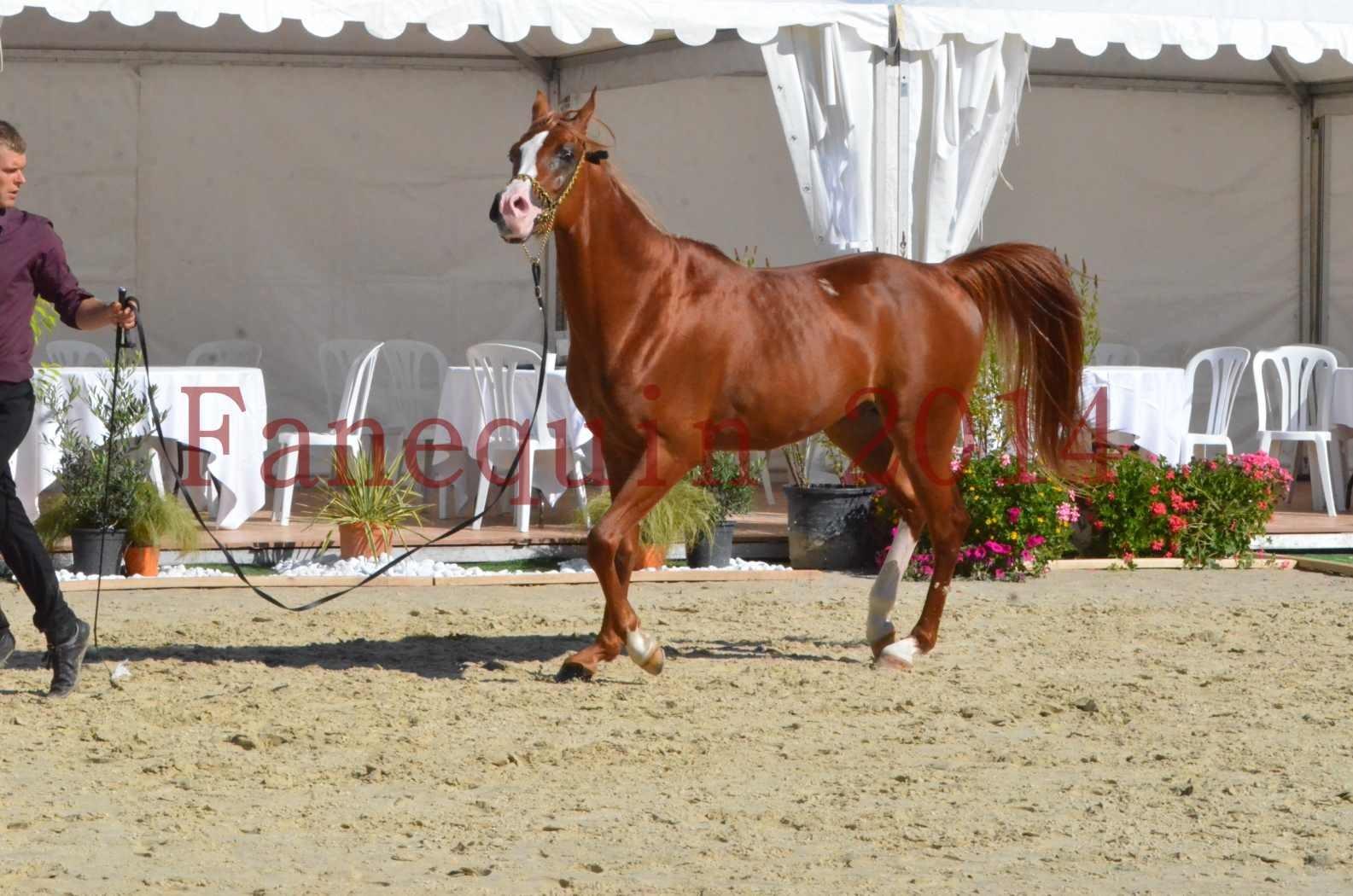 Championnat de FRANCE 2014 - Amateurs - SELECTO IBN SAMAWI - 056