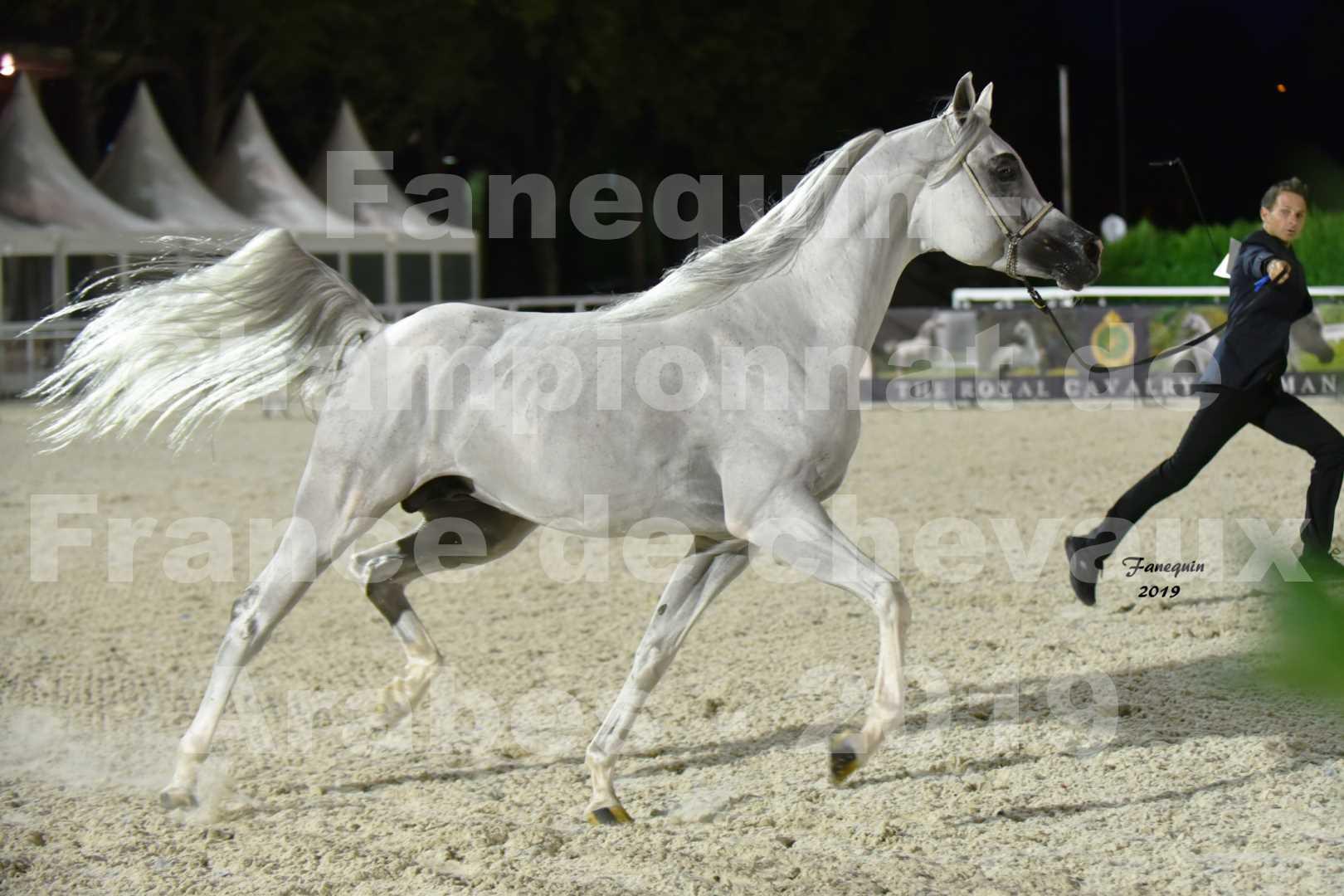 Championnat de France des chevaux Arabes en 2019 à VICHY - SHAMS EL ASHIRAF - 2