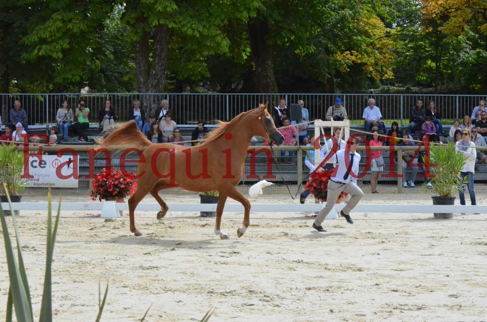 CHAMPIONNAT DE FRANCE 2014 A POMPADOUR - Championnat - LUTFINAH JA - 07