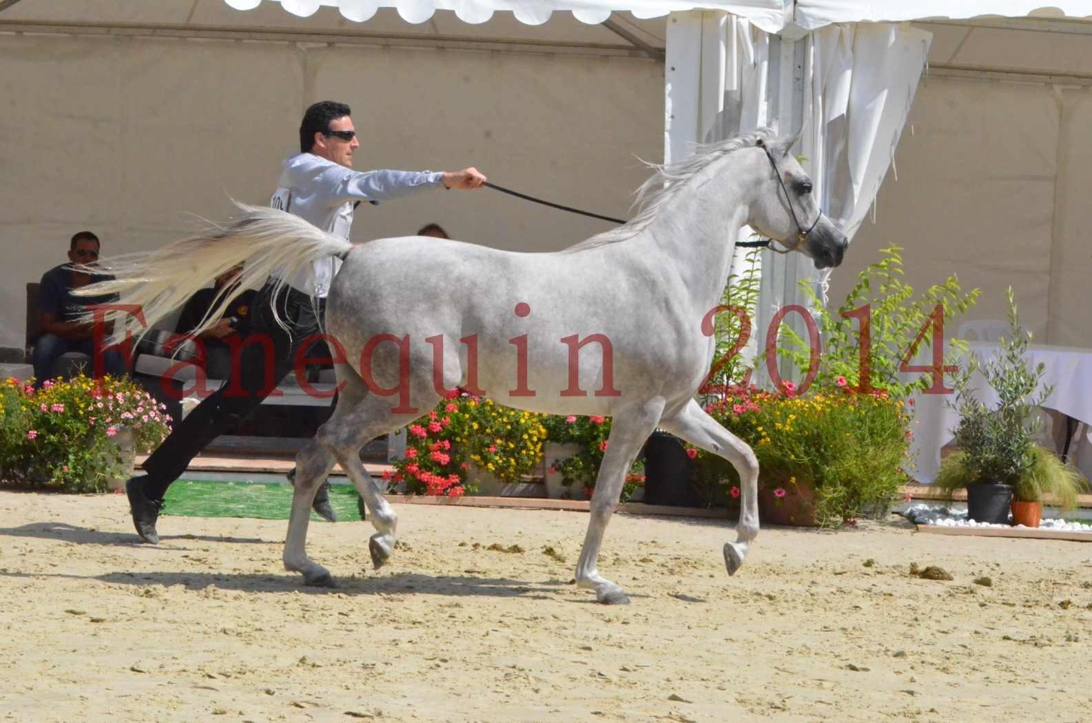 Championnat de FRANCE 2014 - Amateurs - VOLODIA DE LAFON - 054