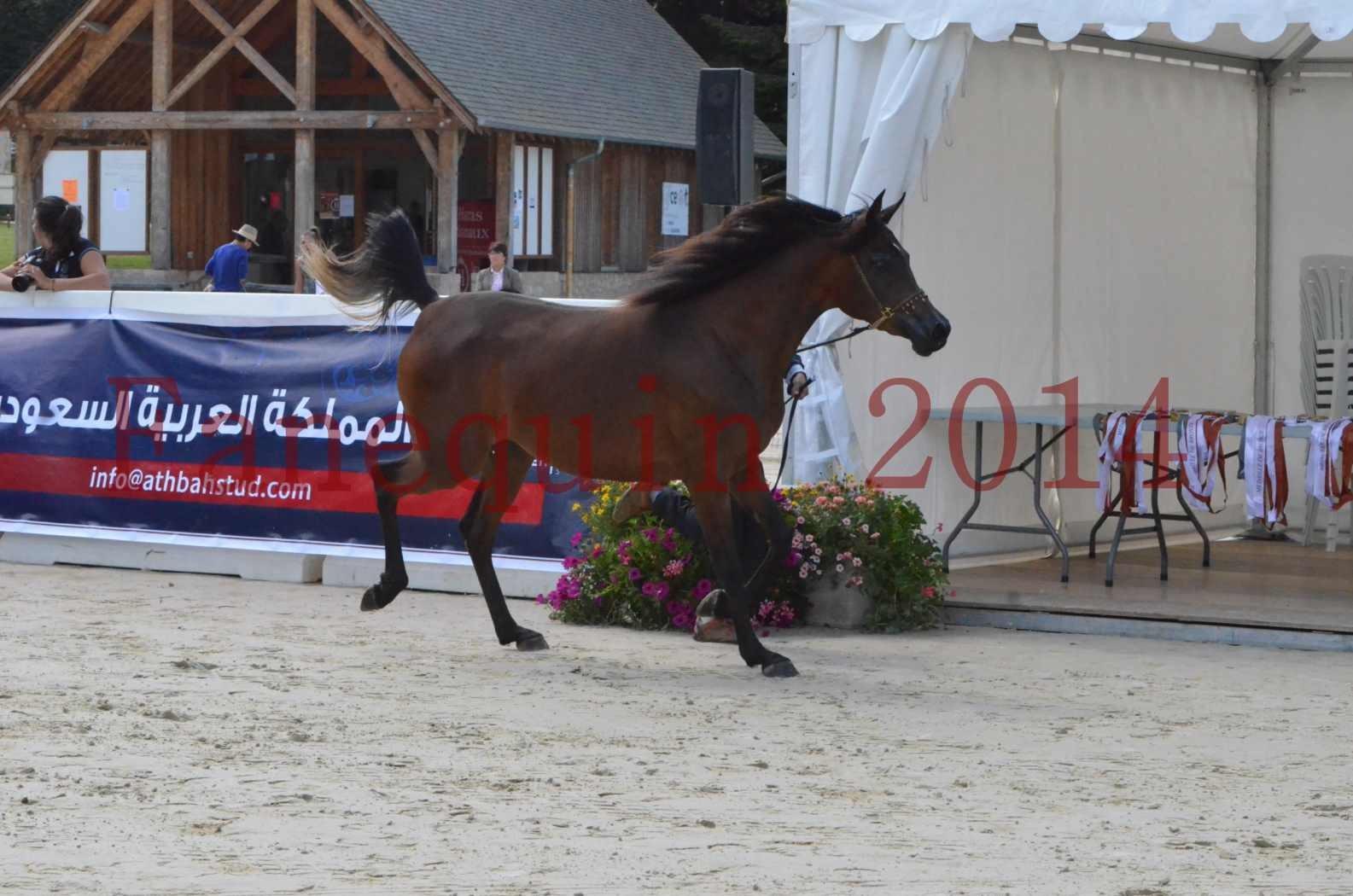 Championnat de FRANCE 2014 - Amateurs - KAL'ELLE D'ELHORIA - 07