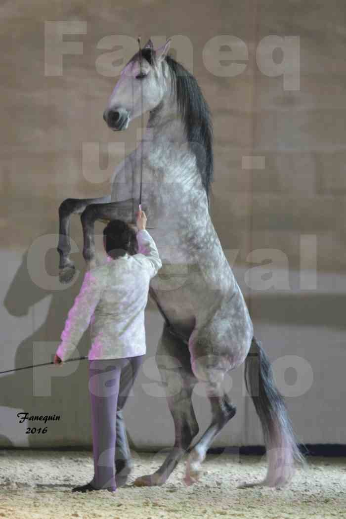 Cheval Passion 2016 - MISEC - Vincent LIBERATOR - 12