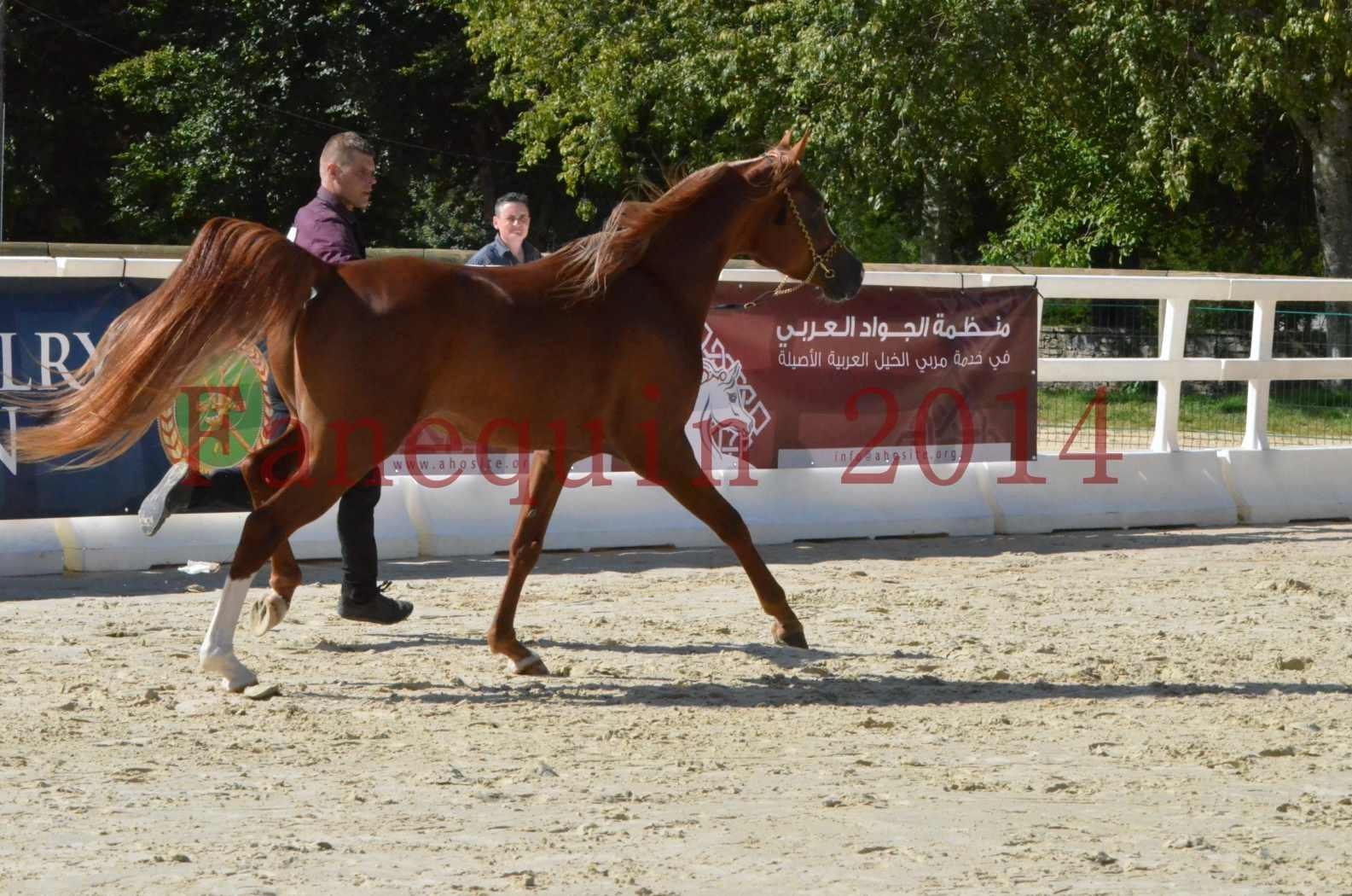 Championnat de FRANCE 2014 - Amateurs - SELECTO IBN SAMAWI - 015