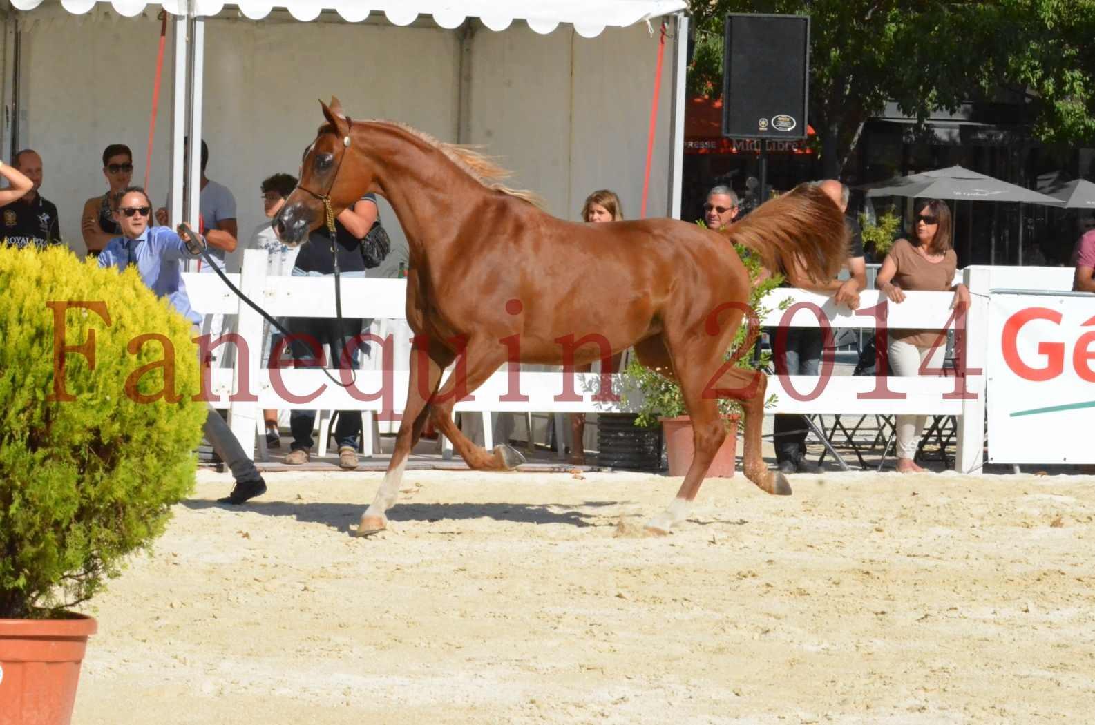 Concours National de Nîmes de chevaux ARABES 2014 - Championnat - MASSAI DE BARREL - 56