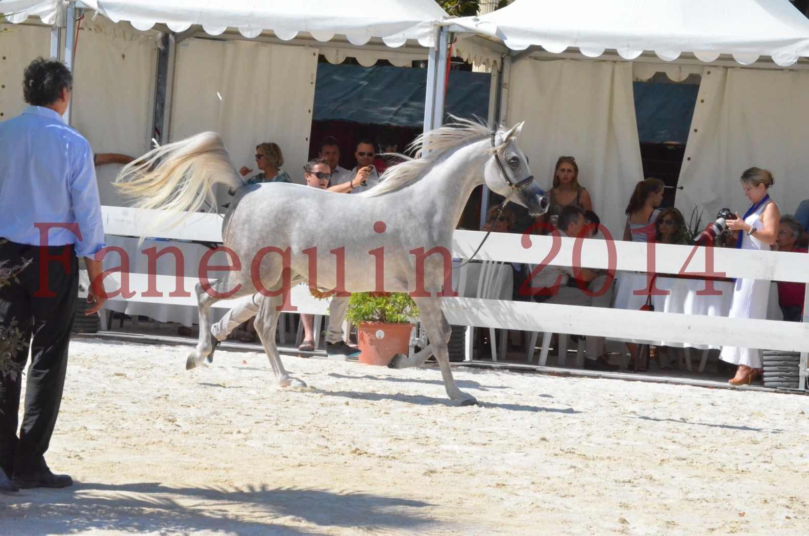 Concours national de Nîmes 2014 - Championnat Femelles Juniors - VOLODIA DE LAFON - 03