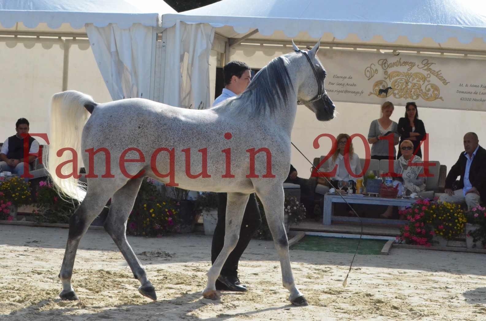 CHAMPIONNAT DE FRANCE  2014 A POMPADOUR - Sélection - SHEYK DE GARGASSAN - 05