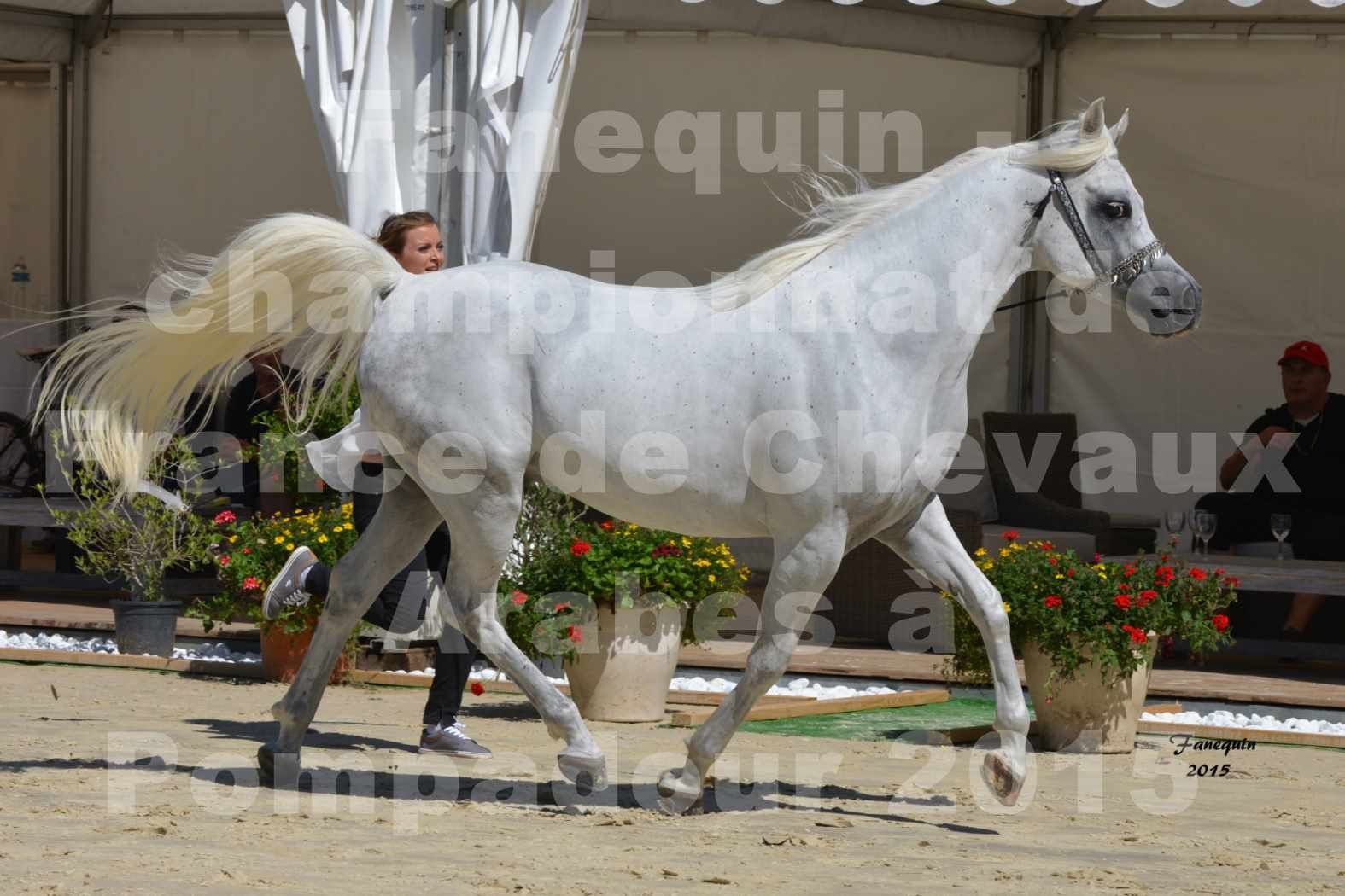 Championnat de FRANCE du cheval ARABE à POMPADOUR 2015 - Classes PROFESSIONNELS - HAADJA - 2