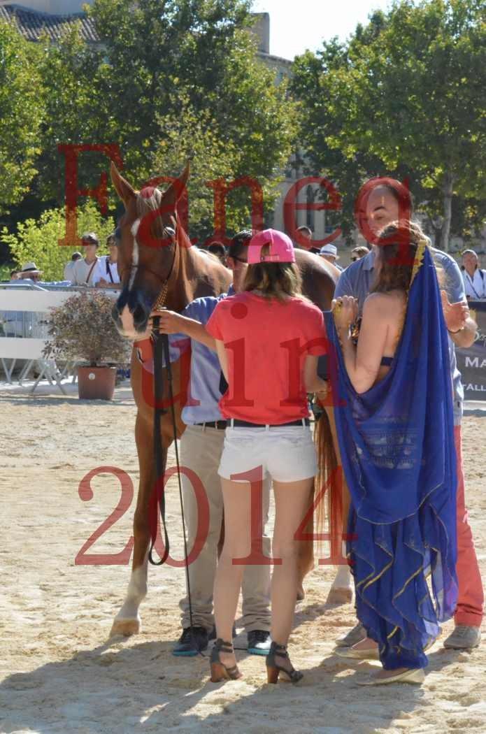 Concours National de Nîmes de chevaux ARABES 2014 - Championnat - MASSAI DE BARREL - 01