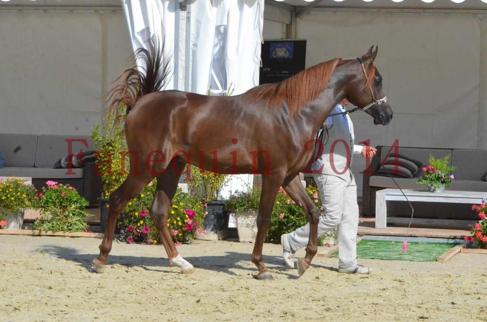 Championnat de FRANCE 2014 - Amateurs - LAMAL - 25
