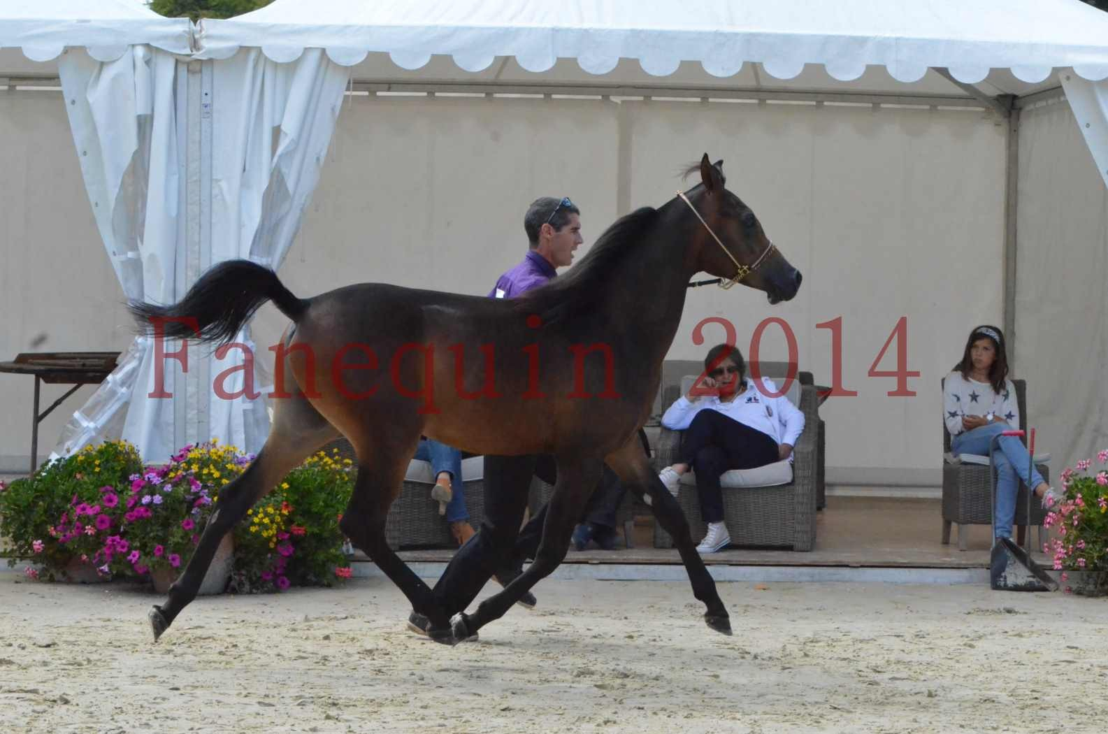 Championnat de FRANCE 2014 - Amateurs - SH FARAJAA - 16