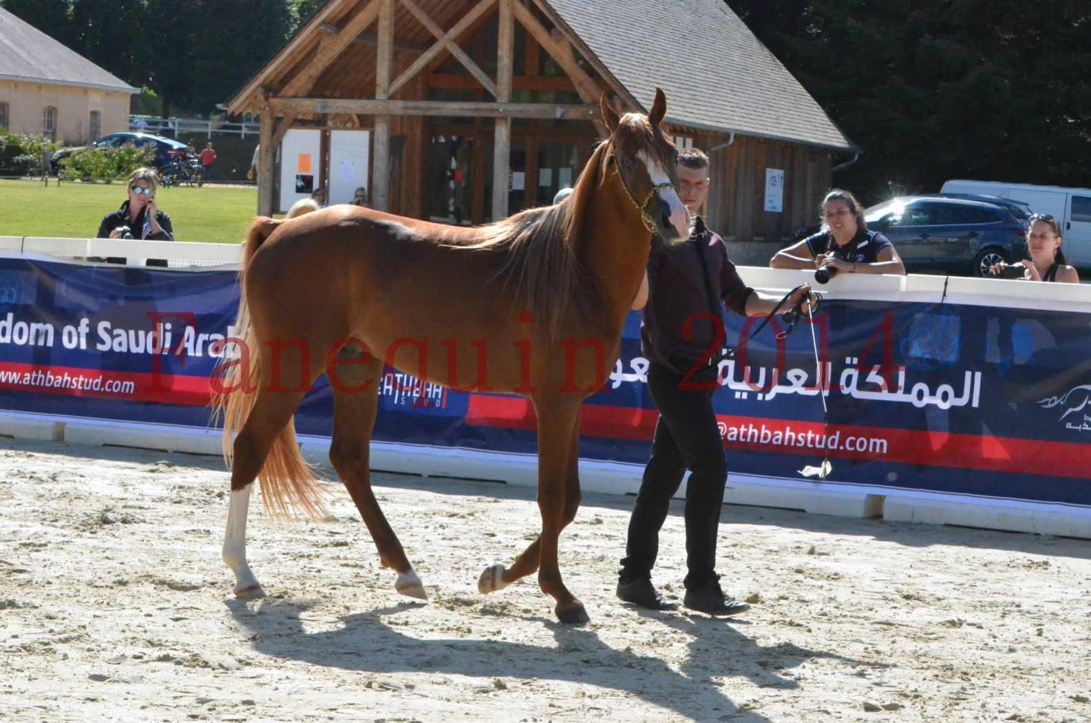 Championnat de FRANCE 2014 - Amateurs - SELECTO IBN SAMAWI - 020