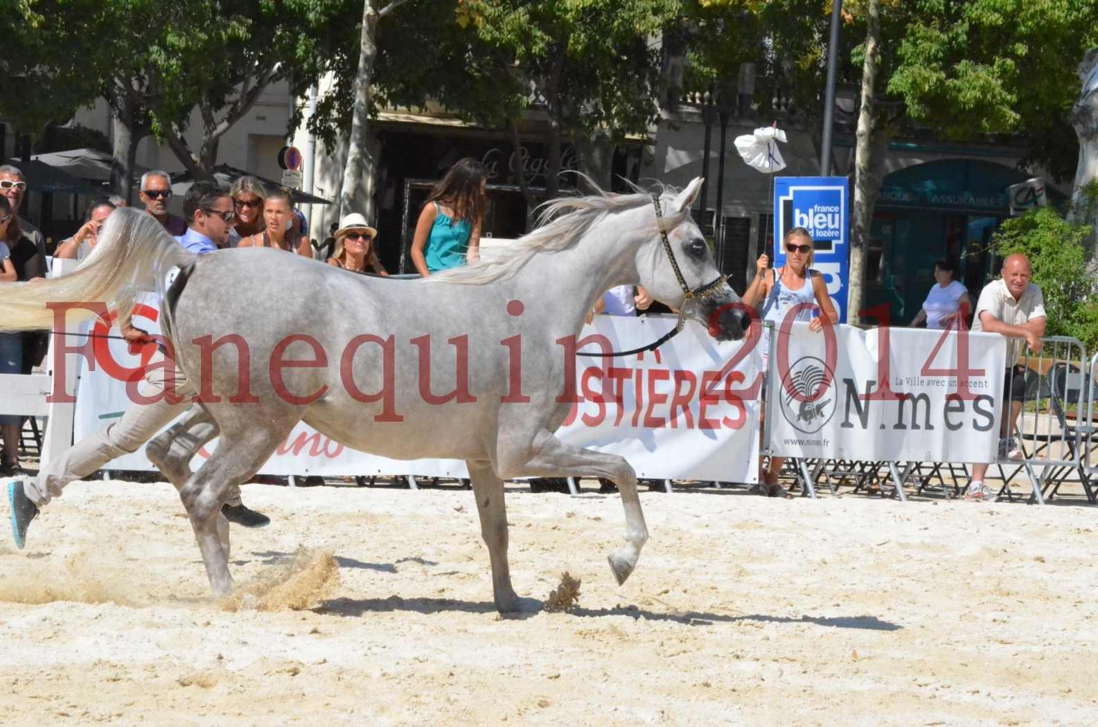 Concours national de Nîmes 2014 - Championnat Femelles Juniors - VOLODIA DE LAFON - 13