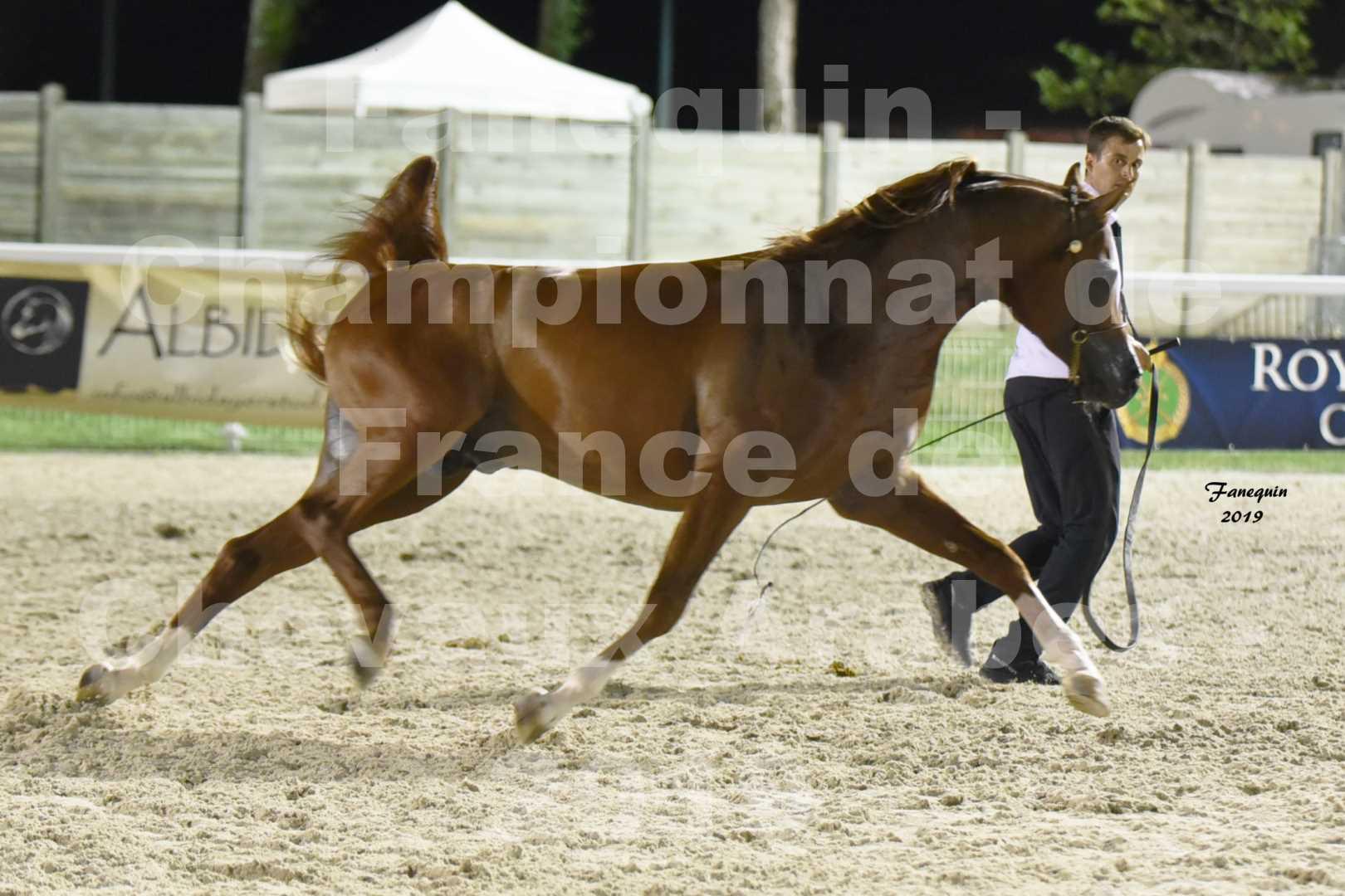 Championnat de France des chevaux Arabes en 2019 à VICHY - DZHARI NUNKI - 6