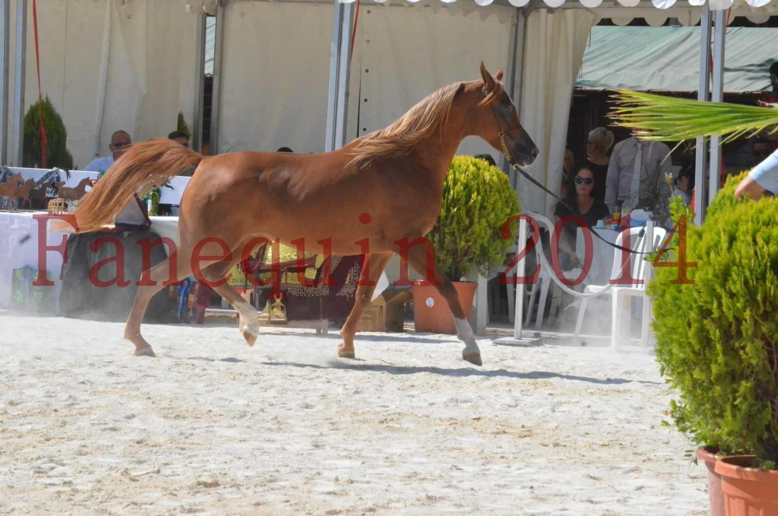 Concours National de Nîmes de chevaux ARABES 2014 - Championnat - MASSAI DE BARREL - 24