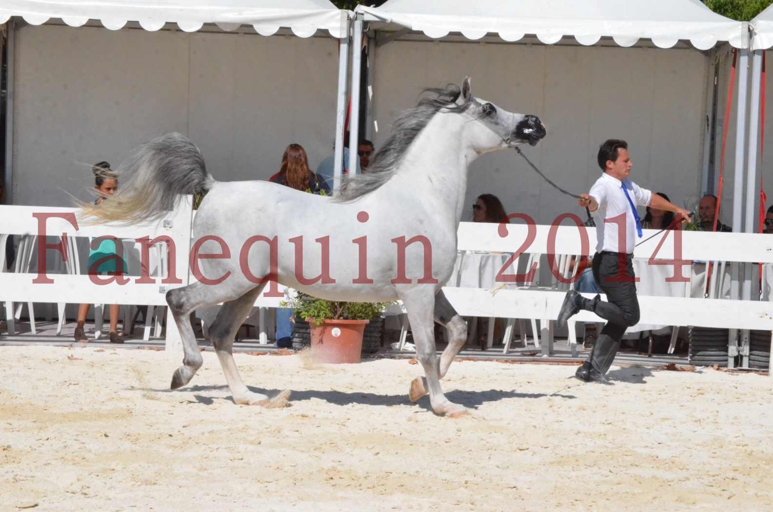 Concours National de Nîmes de chevaux ARABES 2014 - Sélection - SHAOLIN DE NEDJAIA - 05