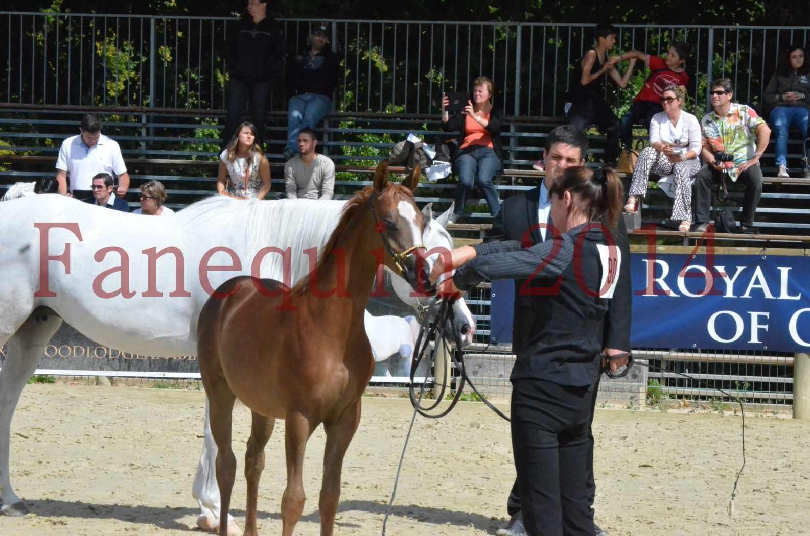 CHAMPIONNAT DE FRANCE 2014 A POMPADOUR - Championnat - TSAR KENZA - 89