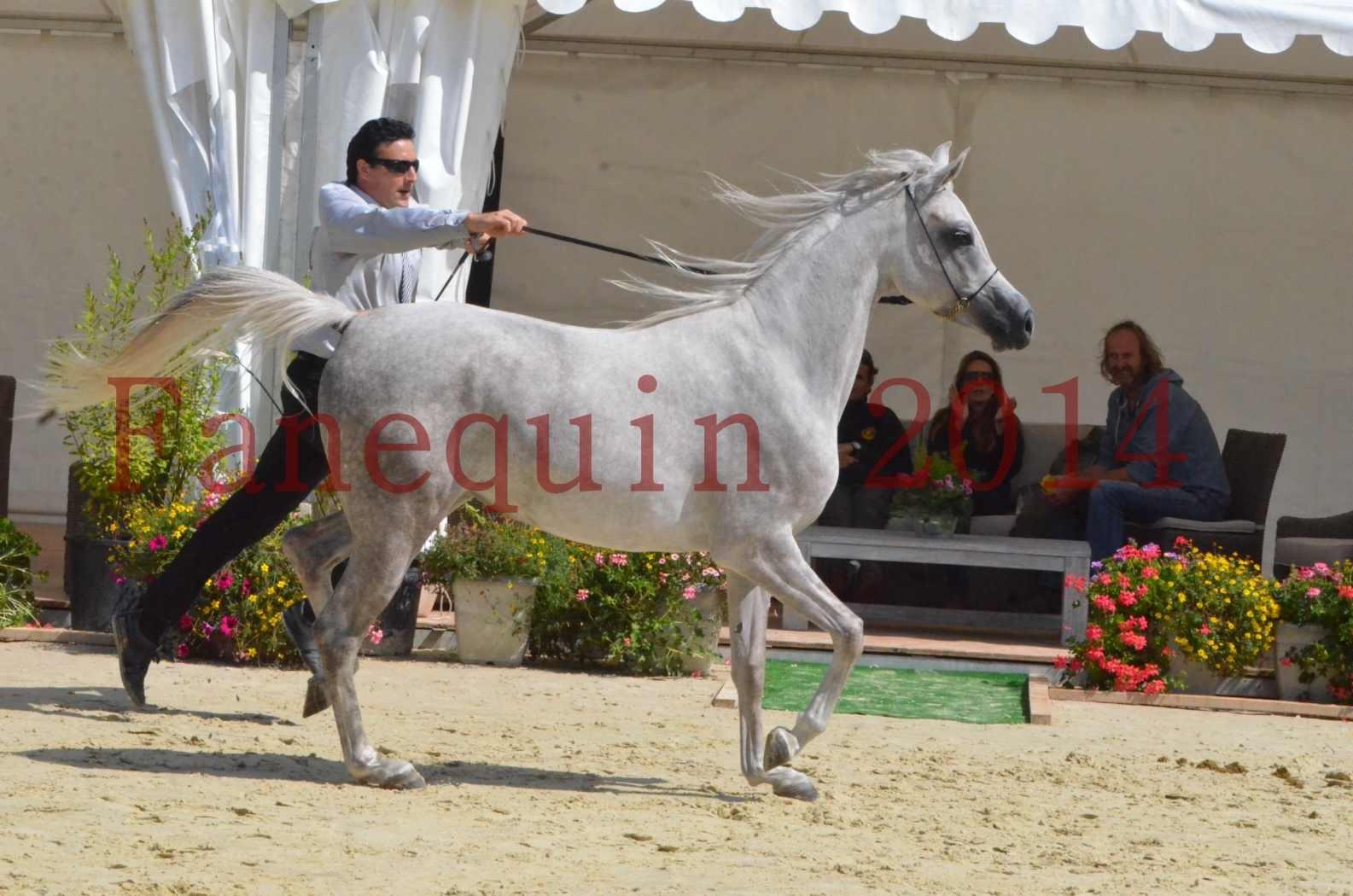 Championnat de FRANCE 2014 - Amateurs - VOLODIA DE LAFON - 052
