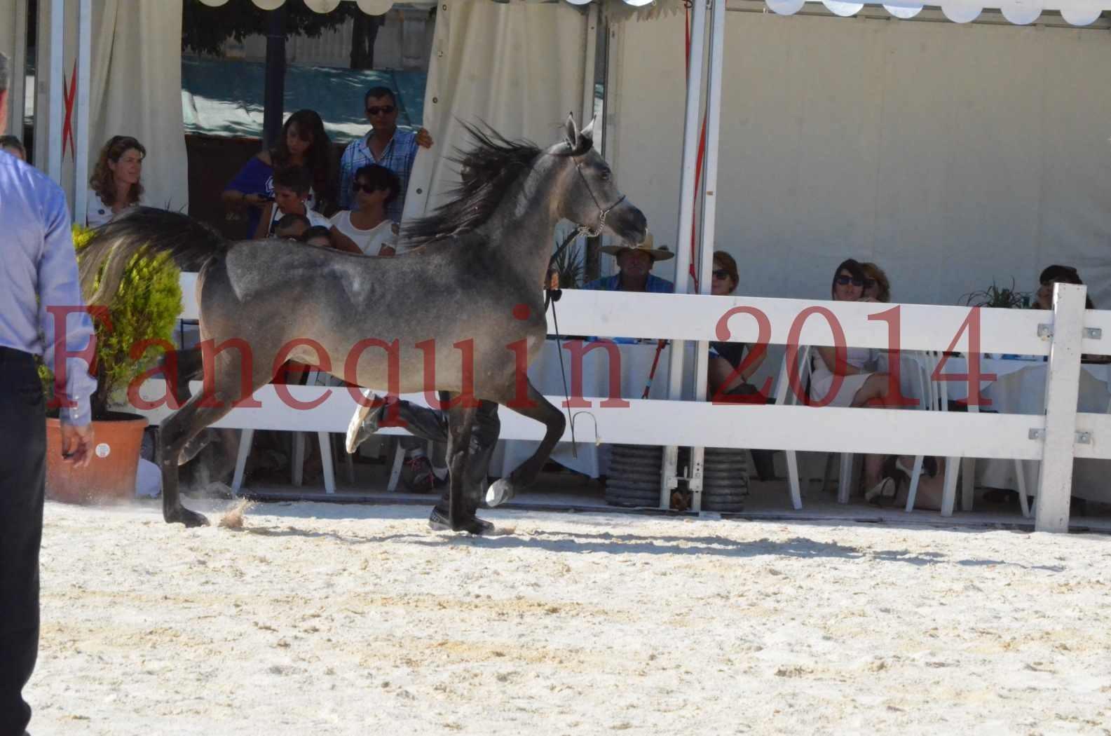 Concours National de Nîmes de chevaux ARABES 2014 - Championnat - JOSEPH'S BOUZIOLS - C 11