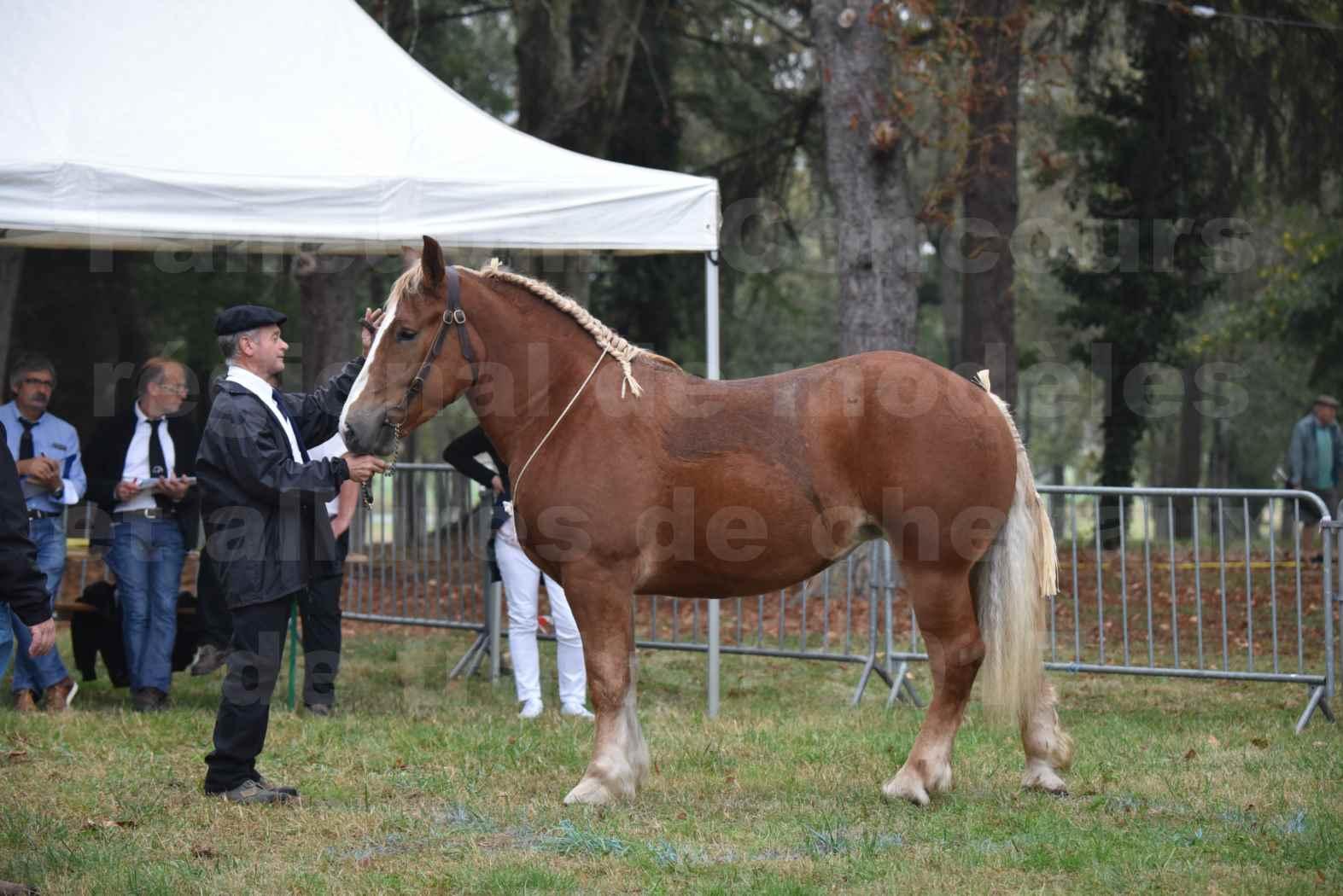 Concours Régional de chevaux de traits en 2017 - Trait BRETON - FLO DE LA MARGUE - 06