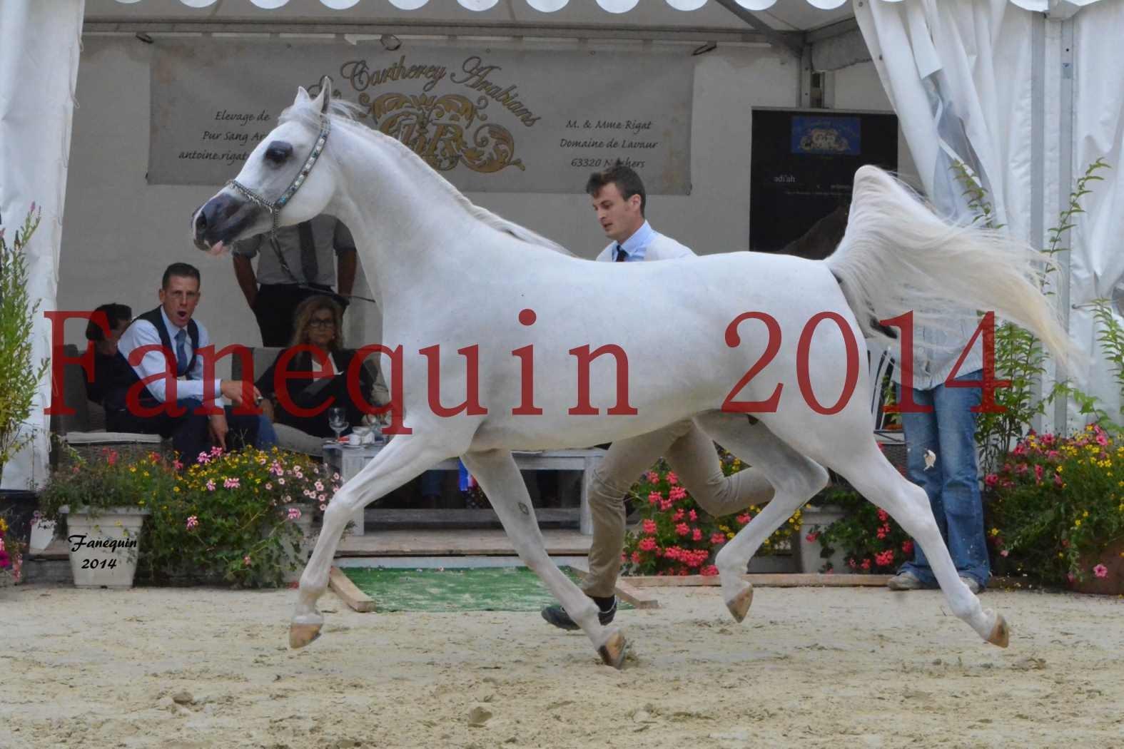 CHAMPIONNAT DE FRANCE 2014 A POMPADOUR - Notre Sélection - BLEUENN MILIN AVEL - 04