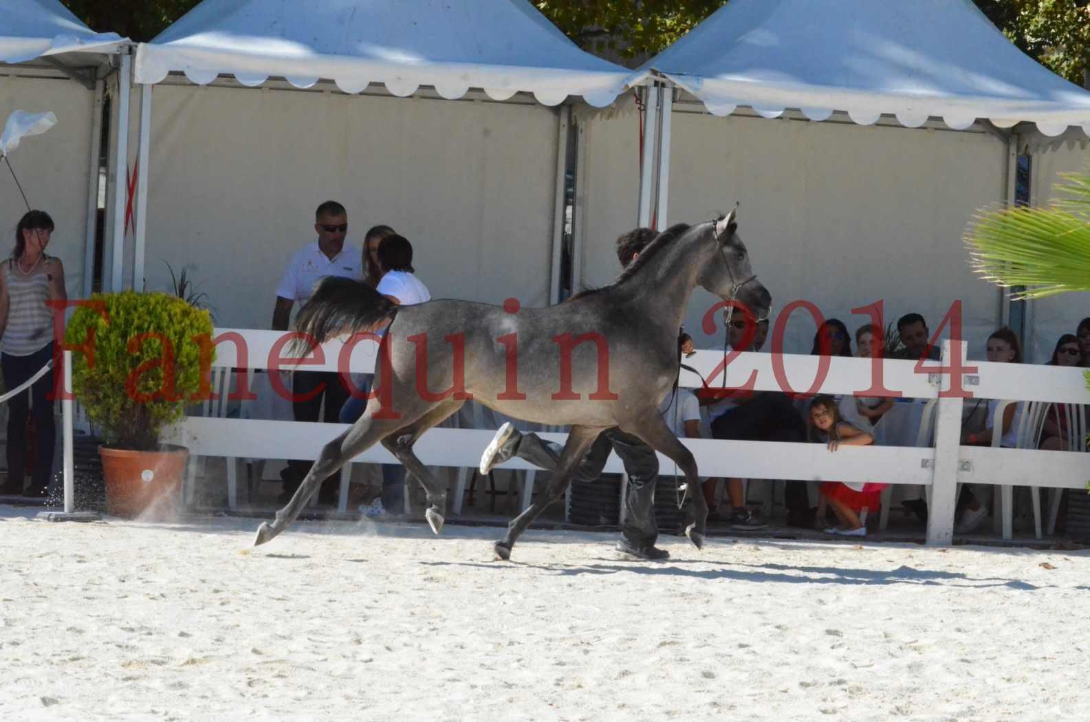 Concours National de Nîmes de chevaux ARABES 2014 - Championnat - JOSEPH'S BOUZIOLS - S 06