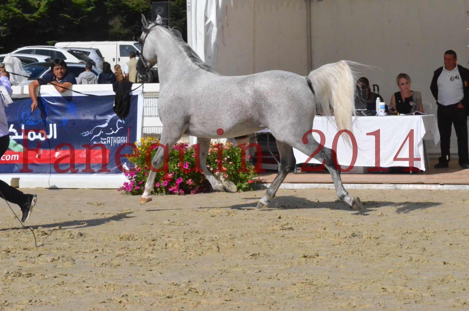 CHAMPIONNAT DE FRANCE  2014 A POMPADOUR - Sélection - SHEYK DE GARGASSAN - 10
