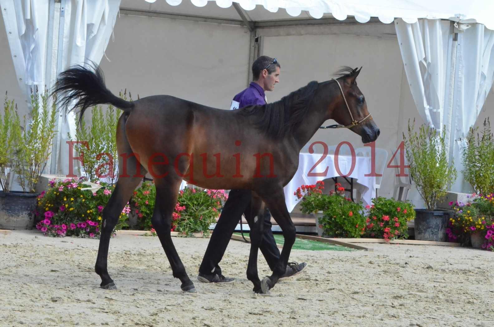 Championnat de FRANCE 2014 - Amateurs - SH FARAJAA - 12