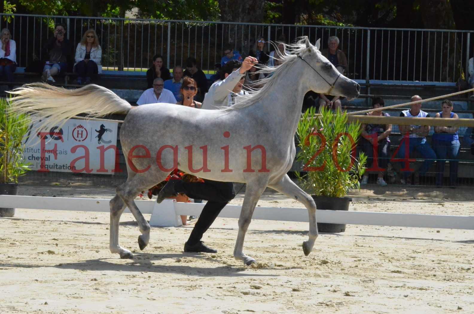 Championnat de FRANCE 2014 - Amateurs - VOLODIA DE LAFON - 023