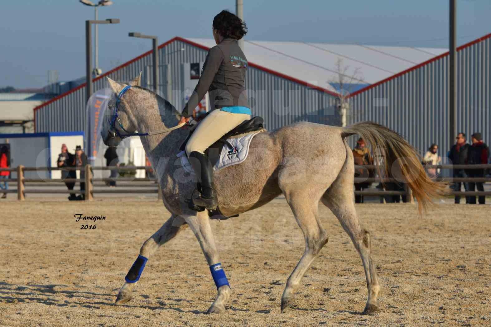 Cheval Passion 2016 - Présentation extérieure de chevaux Arabes montés - 08