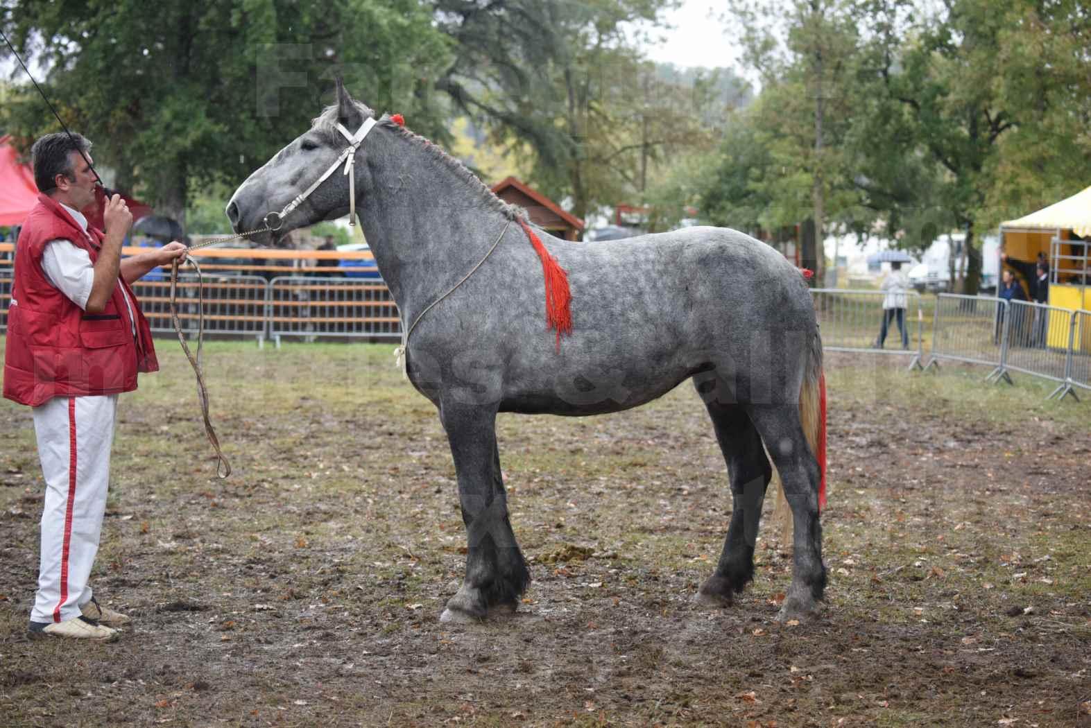Concours Régional de chevaux de traits en 2017 - Pouliche Trait PERCHERON - FANY DES COUSTAUSSES - 1