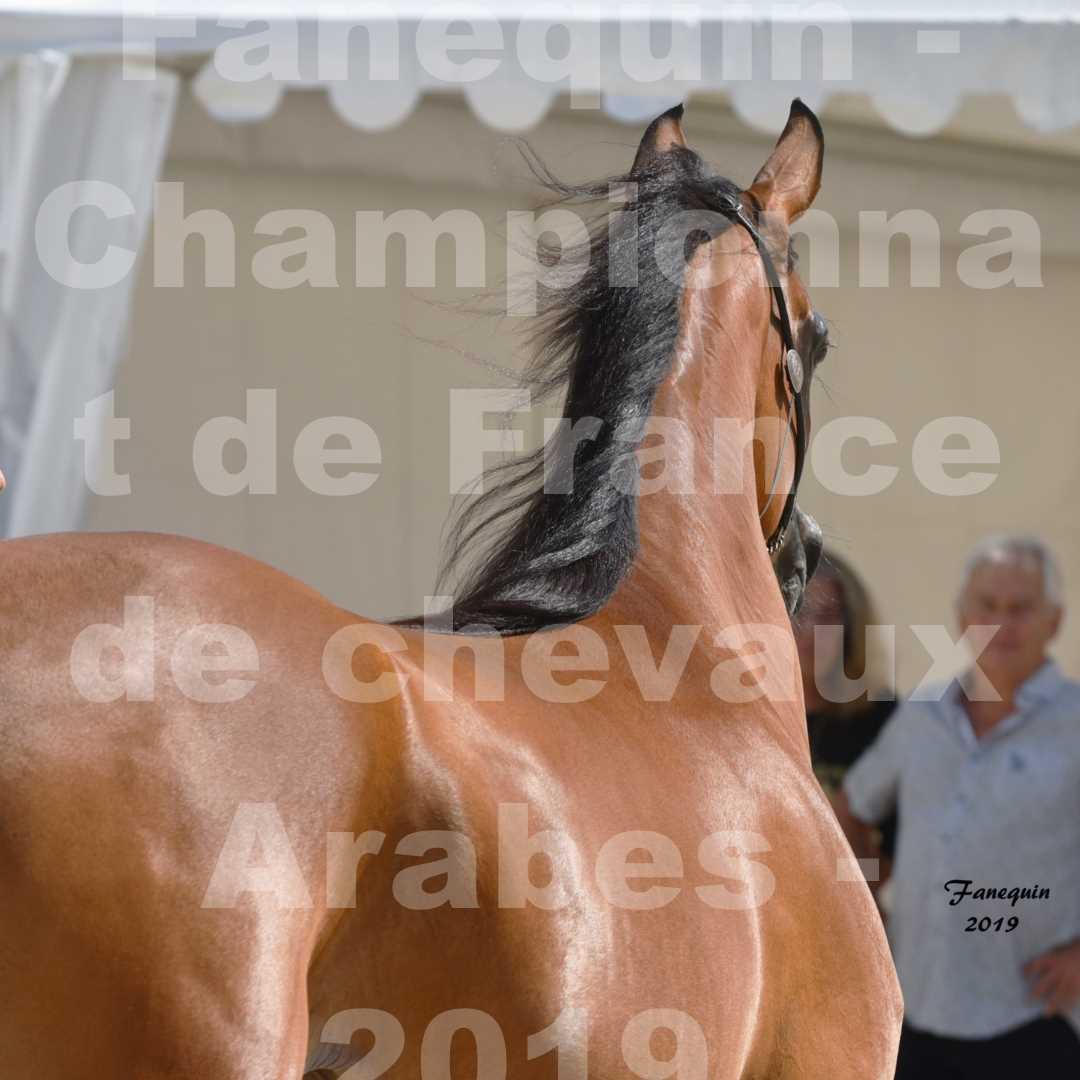 Championnat de France des chevaux Arabes en 2019 à VICHY - SH CHARISMA - Portraits - 2