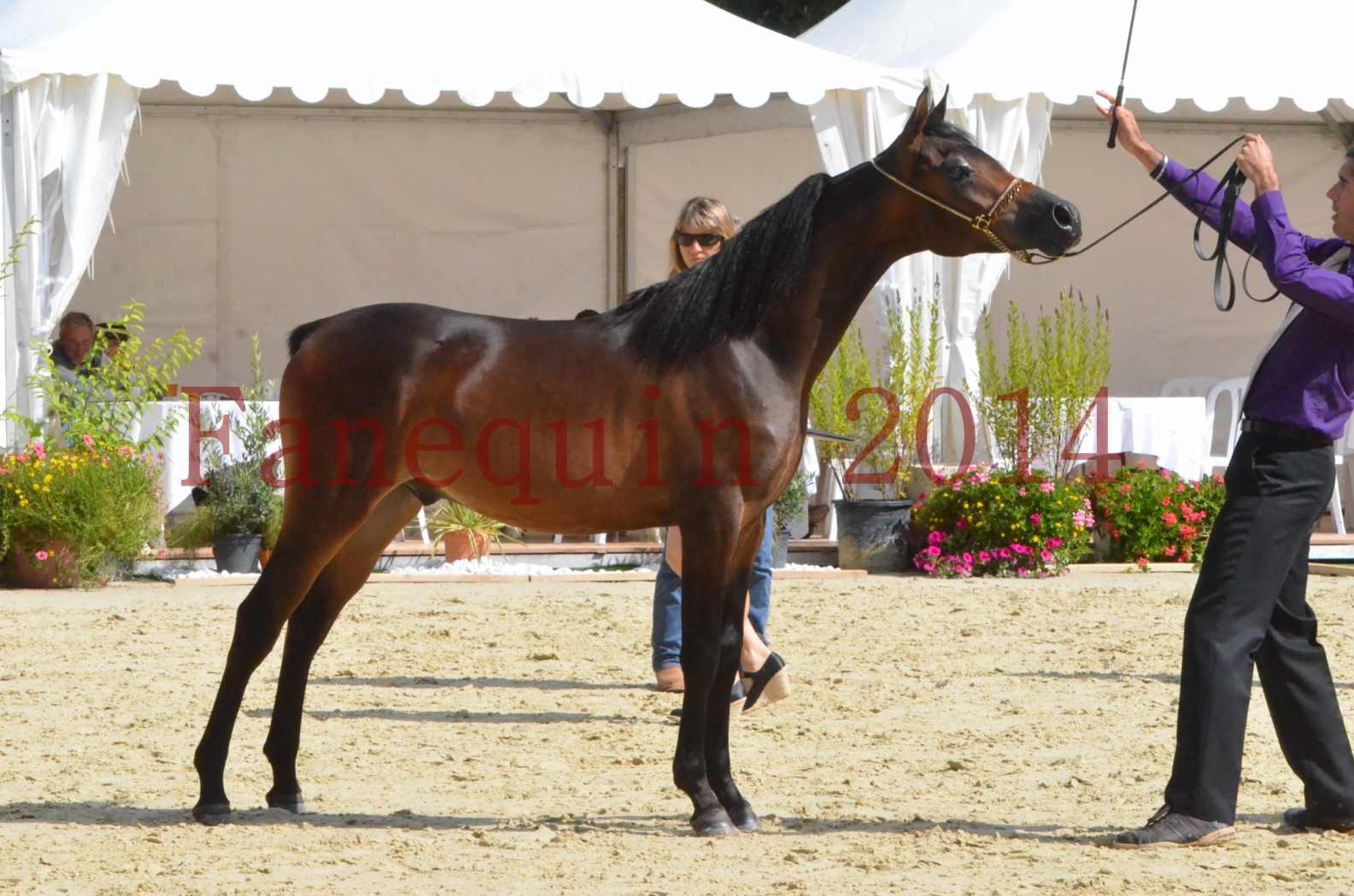 Championnat de FRANCE 2014 - Amateurs - SH FARAJAA - 37