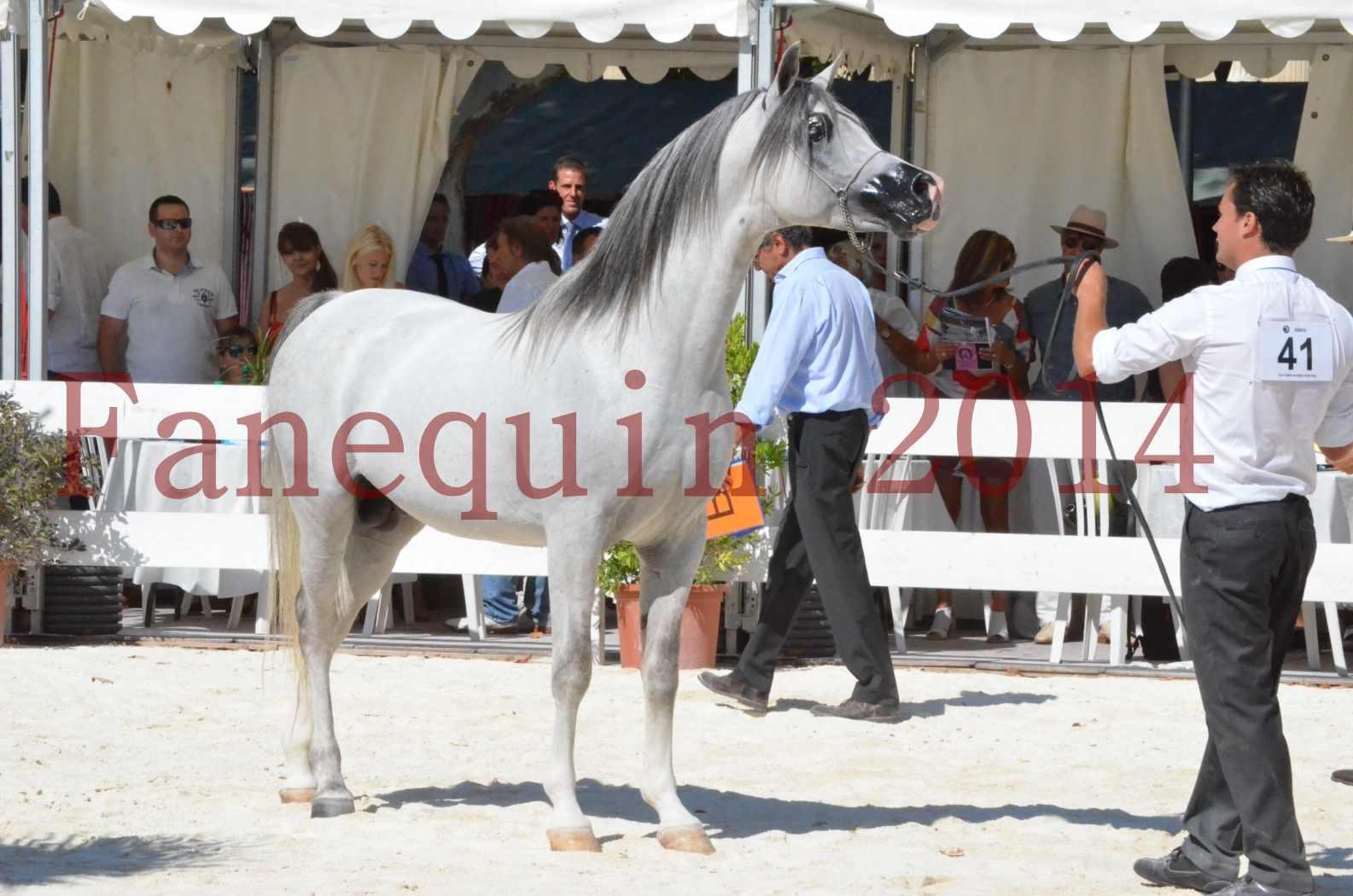 Concours National de Nîmes de chevaux ARABES 2014 - Sélection - SHAOLIN DE NEDJAIA - 78