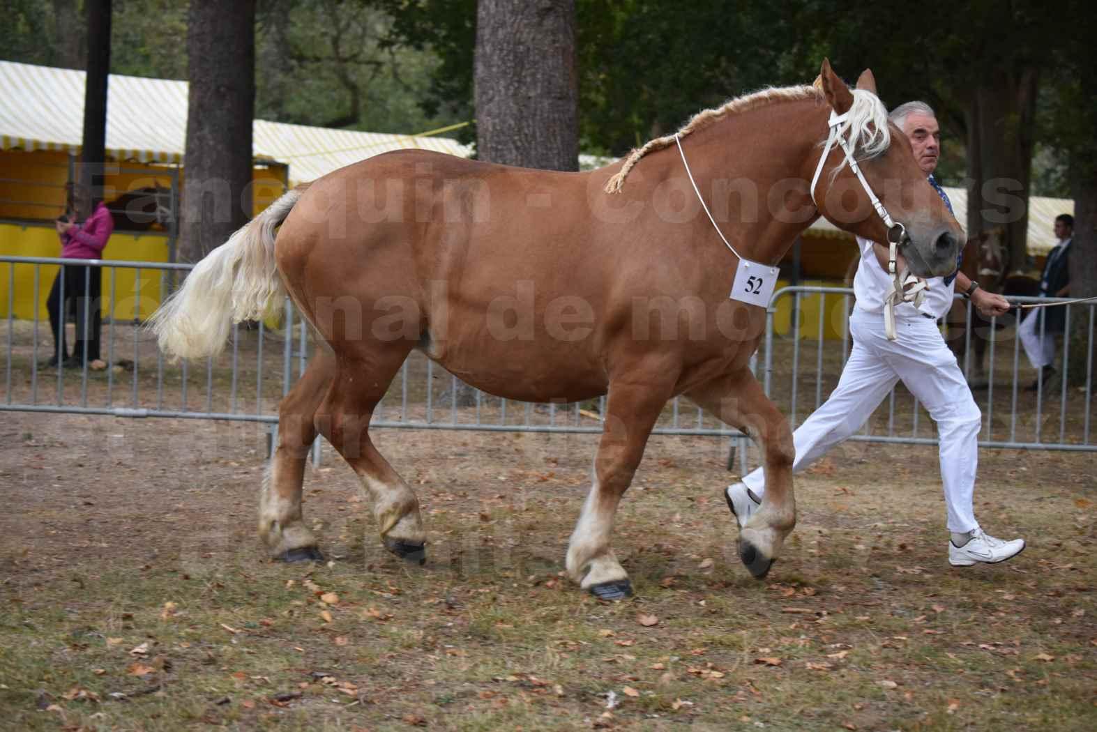 Concours Régional de chevaux de traits en 2017 - Jument & Poulain COMTOIS - BAILLA DU CLOS - 33