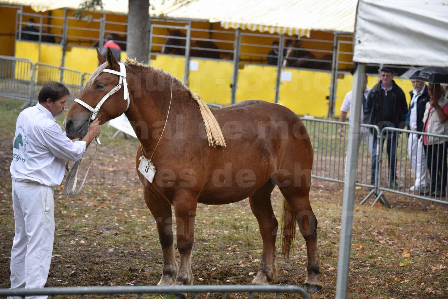 Concours Régional de chevaux de traits en 2017 - Trait COMTOIS - FIDJY DE GRILLOLES - 01